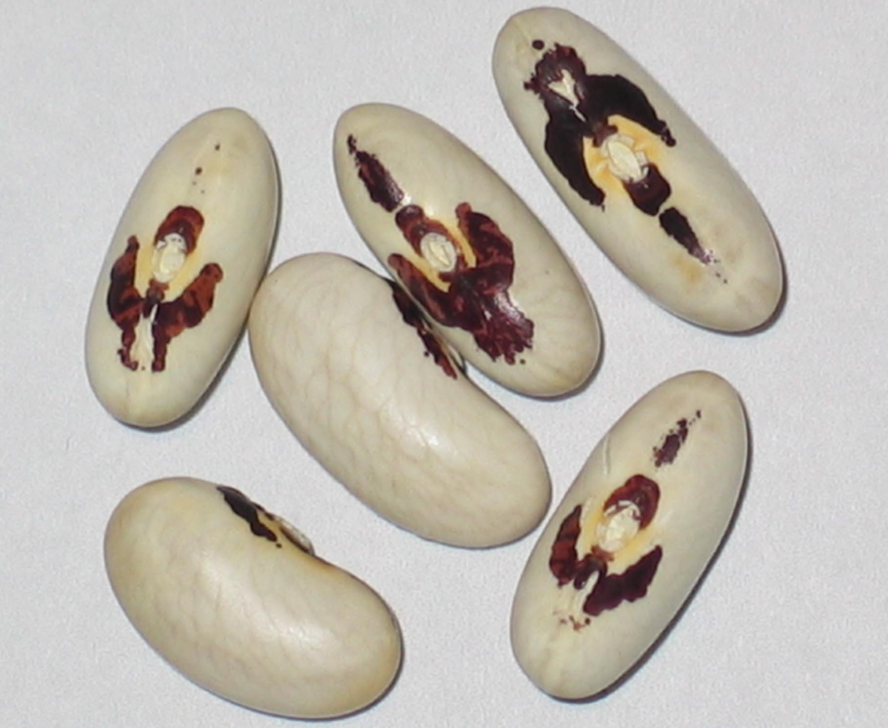 image of Algarrobo beans