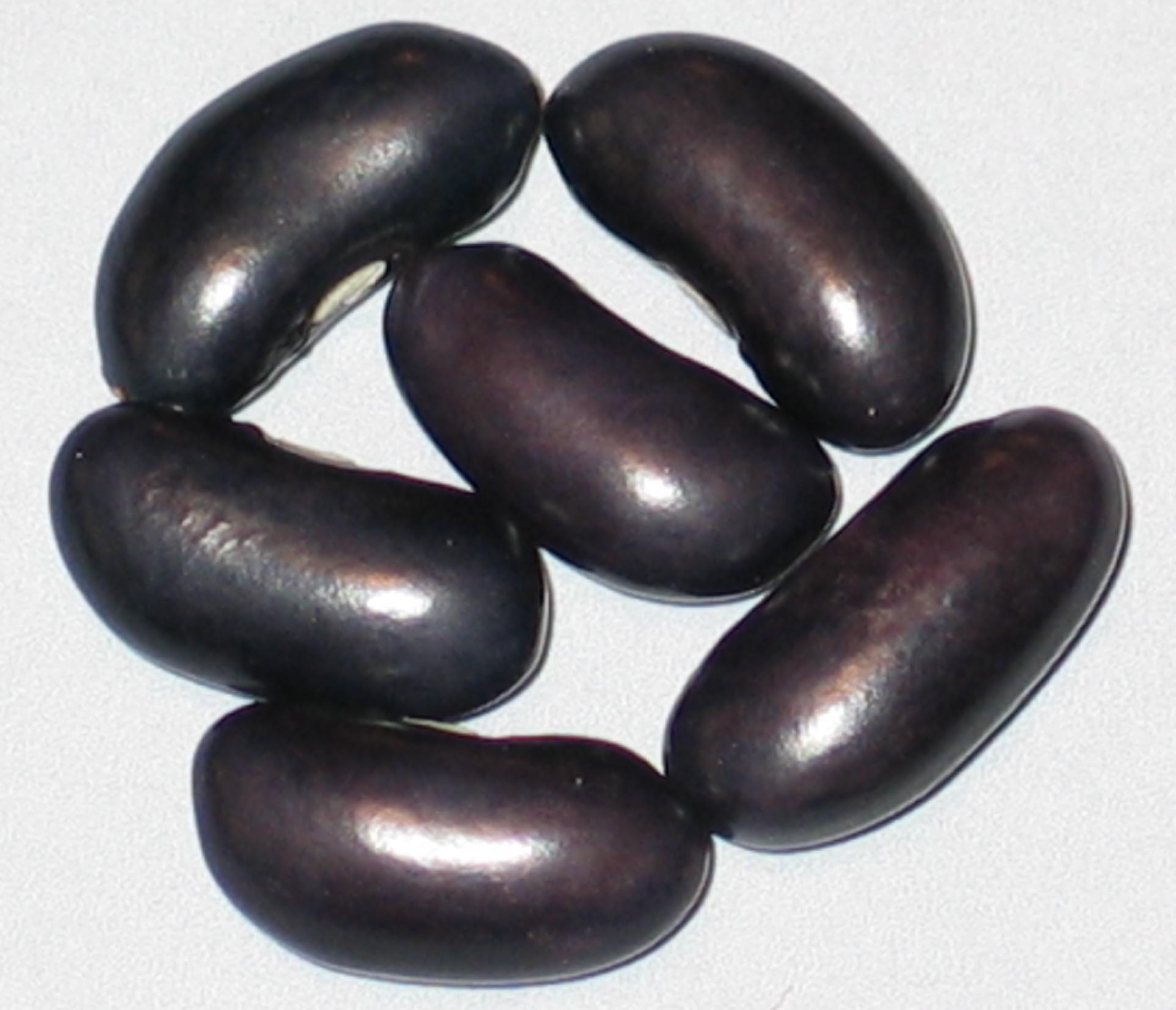 image of Anderson's Wonder beans