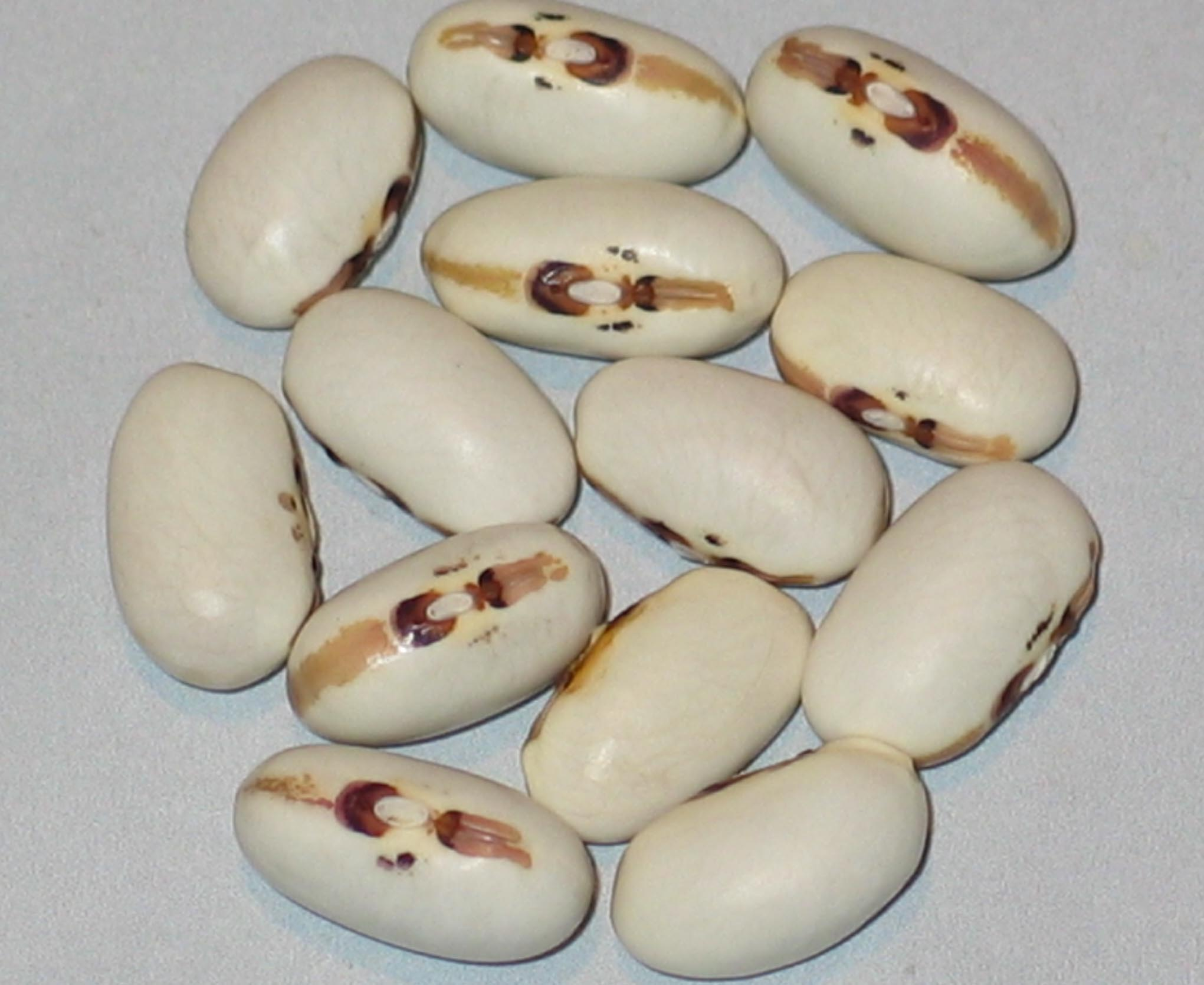 image of Angel Eye beans