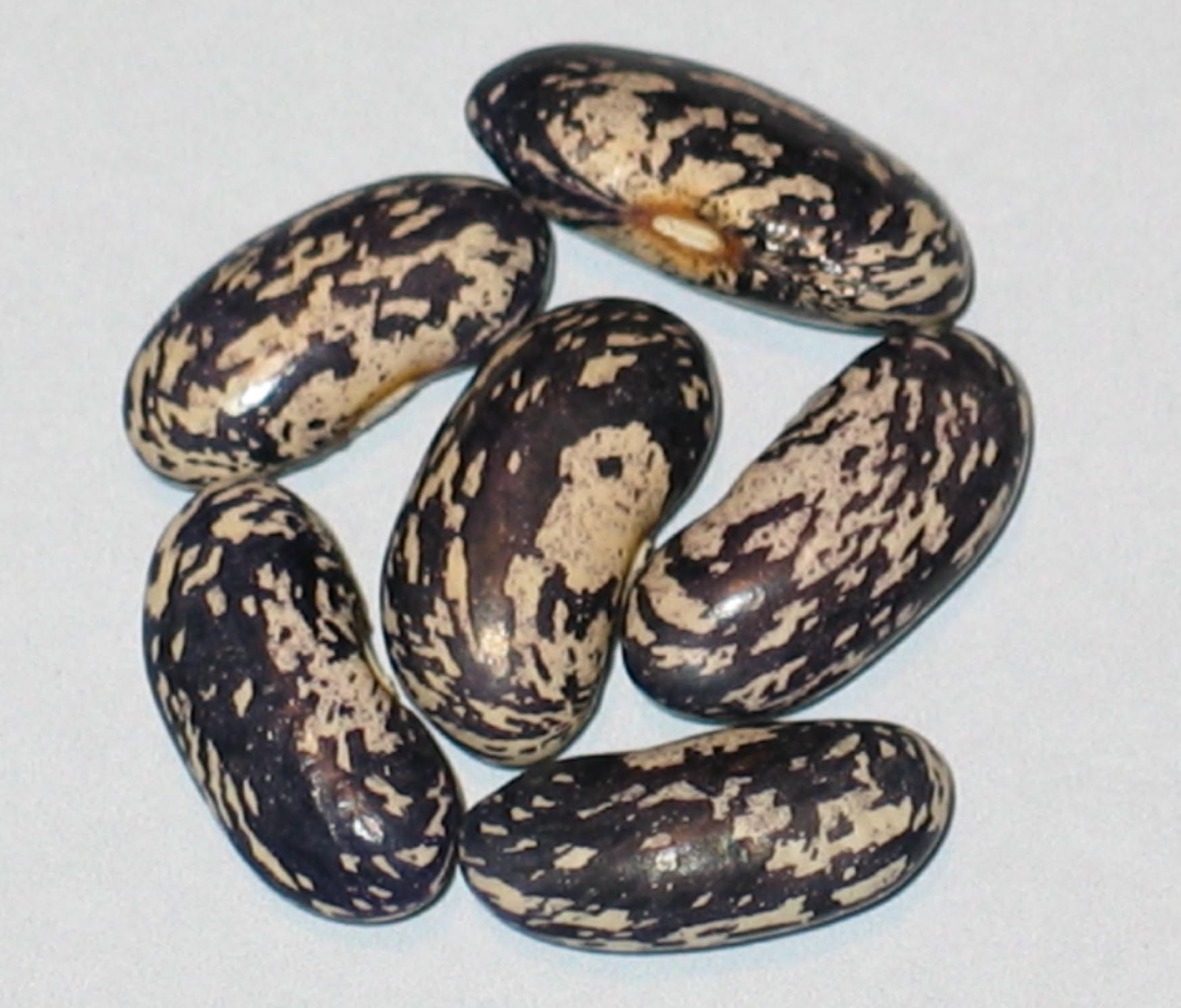 image of Bamberger Blaue beans