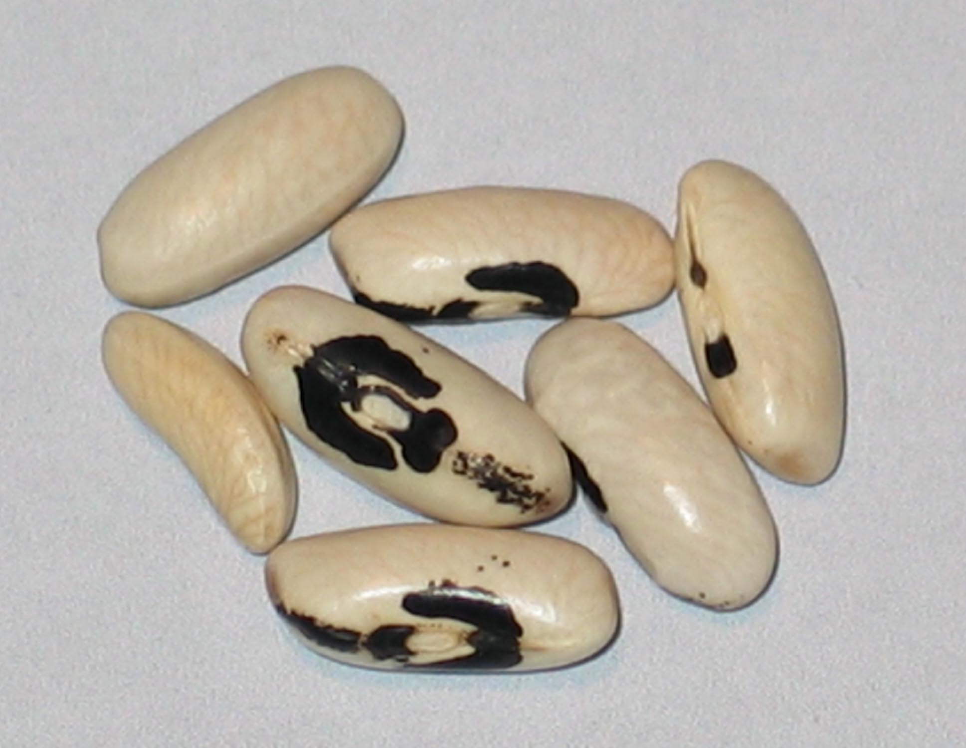 image of Best Of All Wax beans