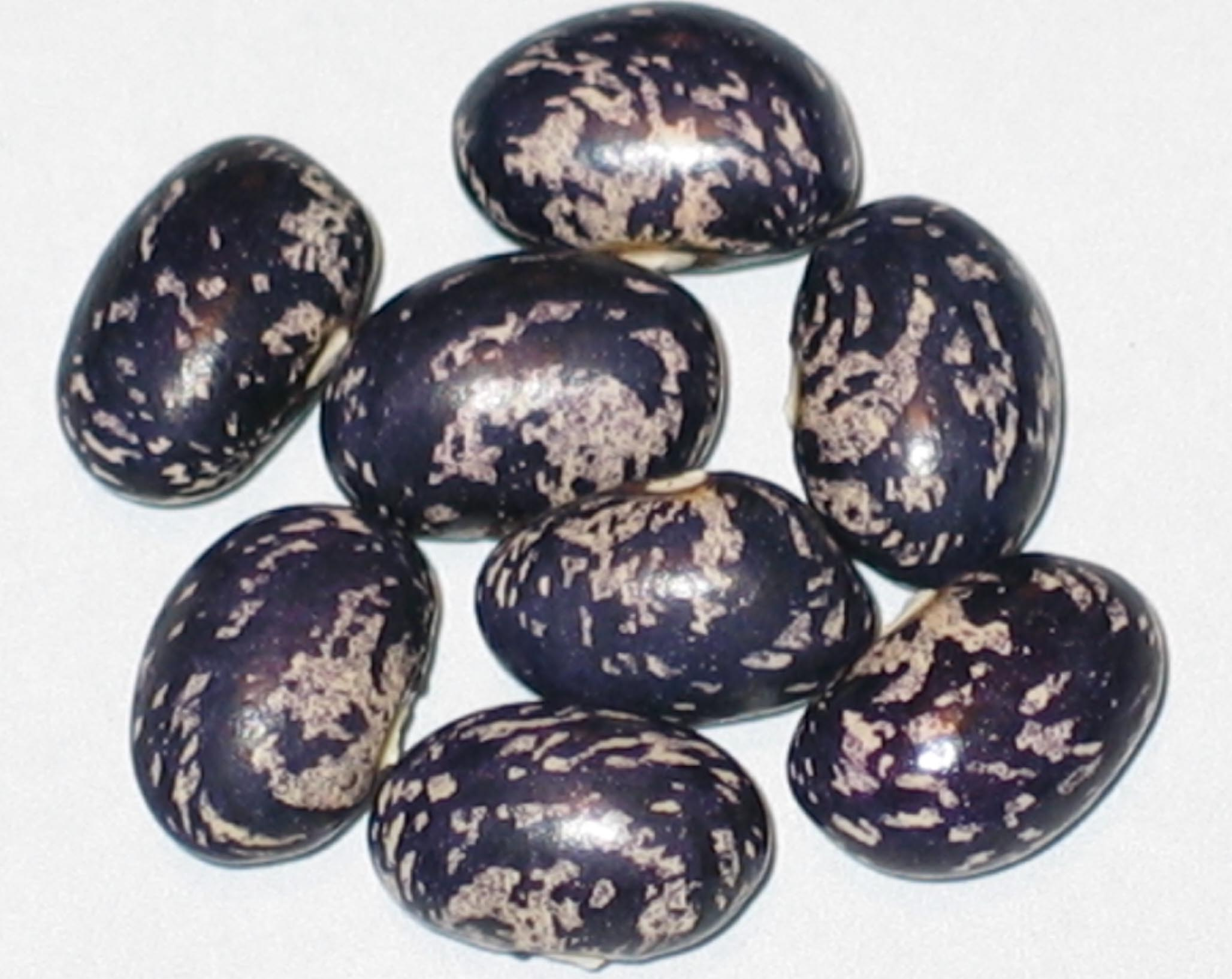 image of Bird Egg Blue beans