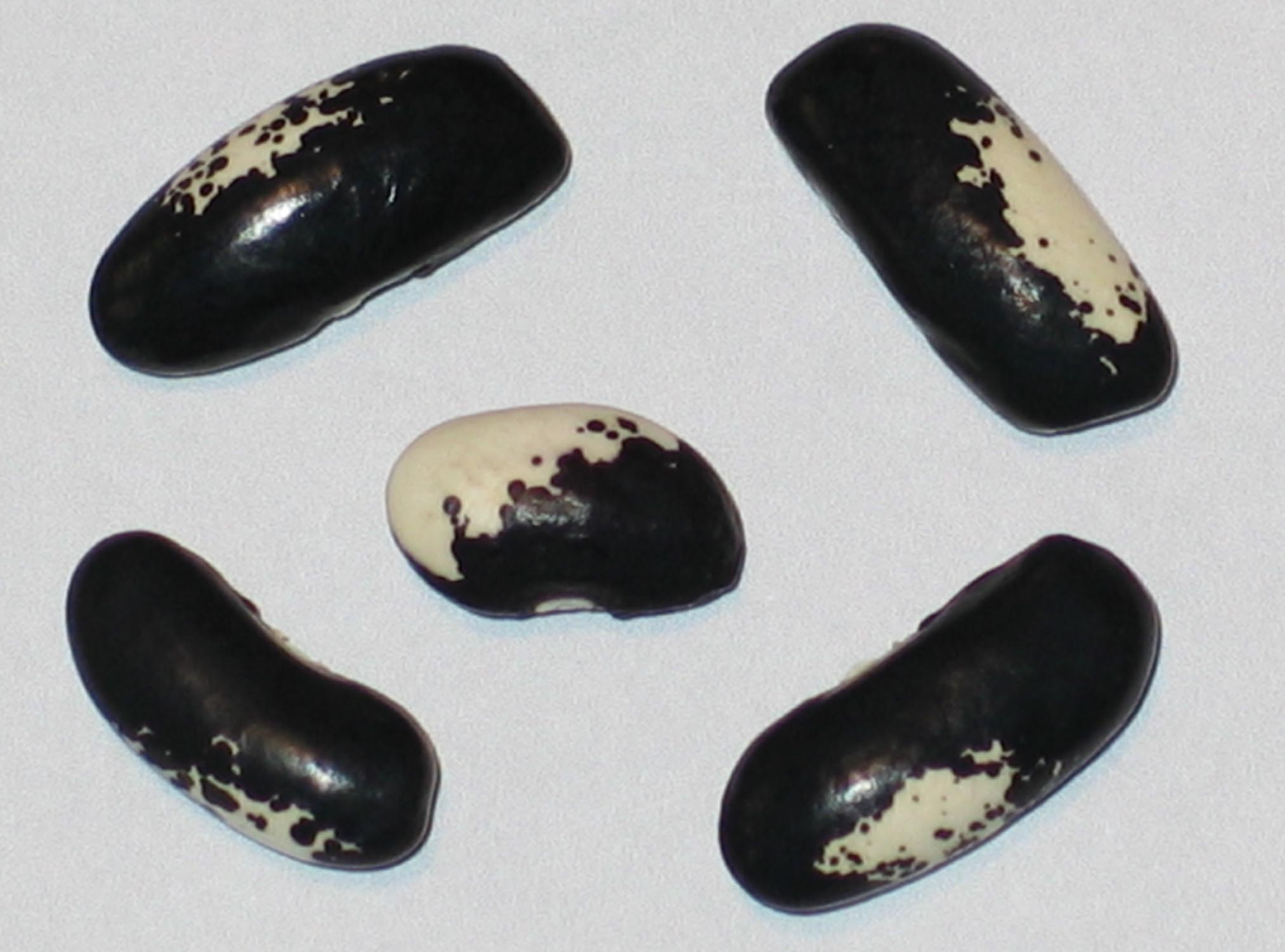 image of Black-Eyed Gem beans