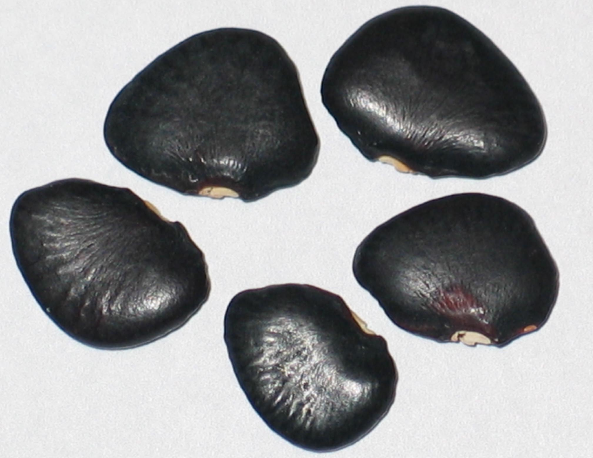 image of Black Star beans