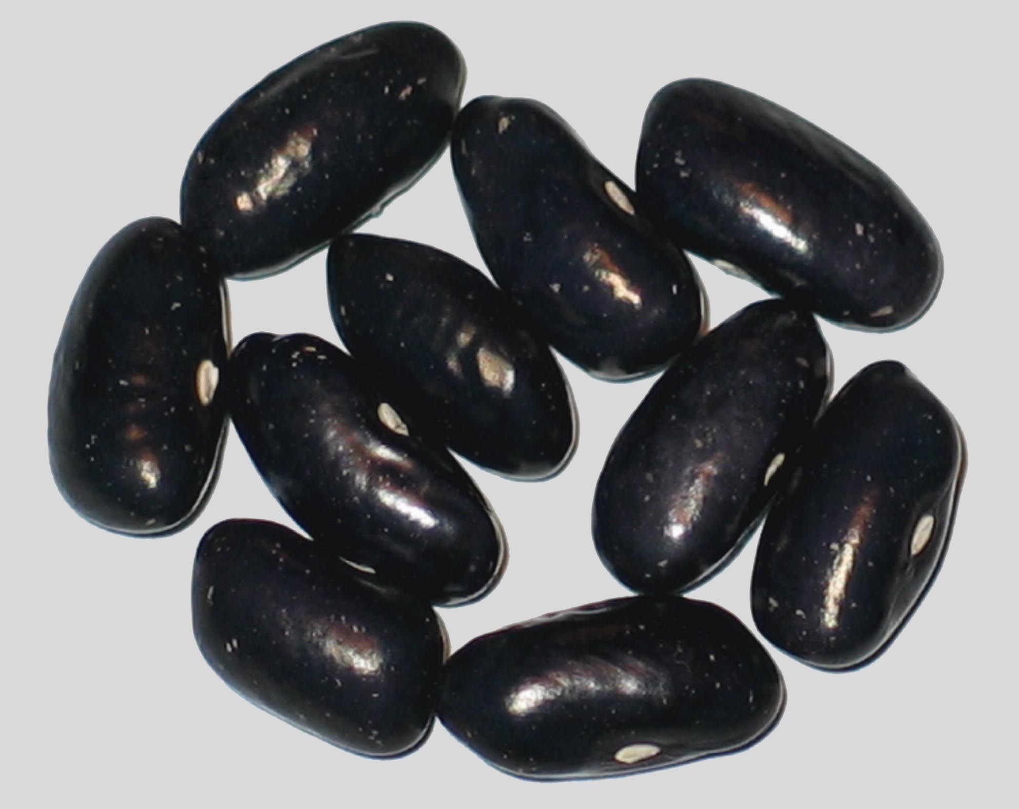 image of Blue Shaxamaxon beans