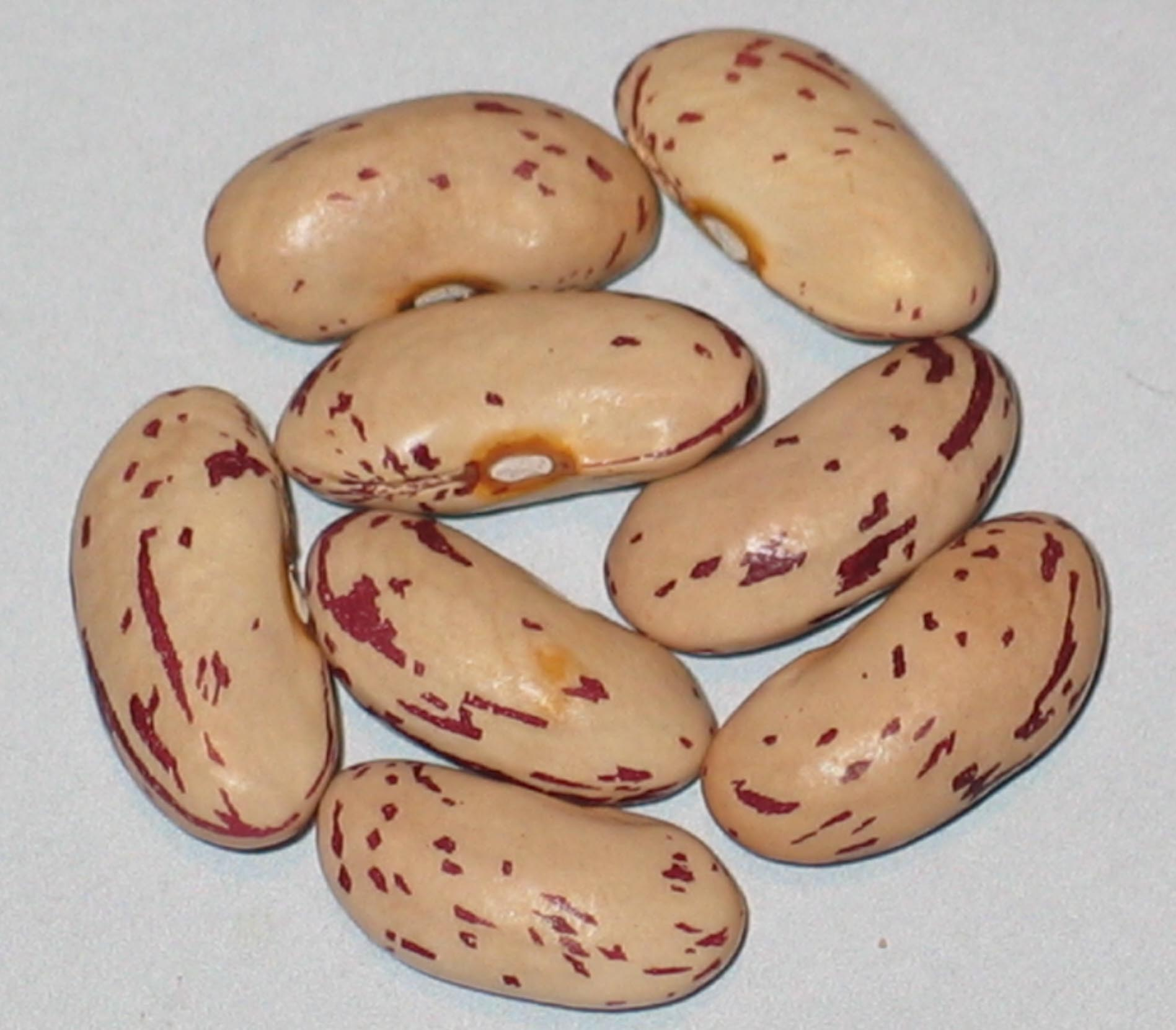 image of Boston Favorite beans
