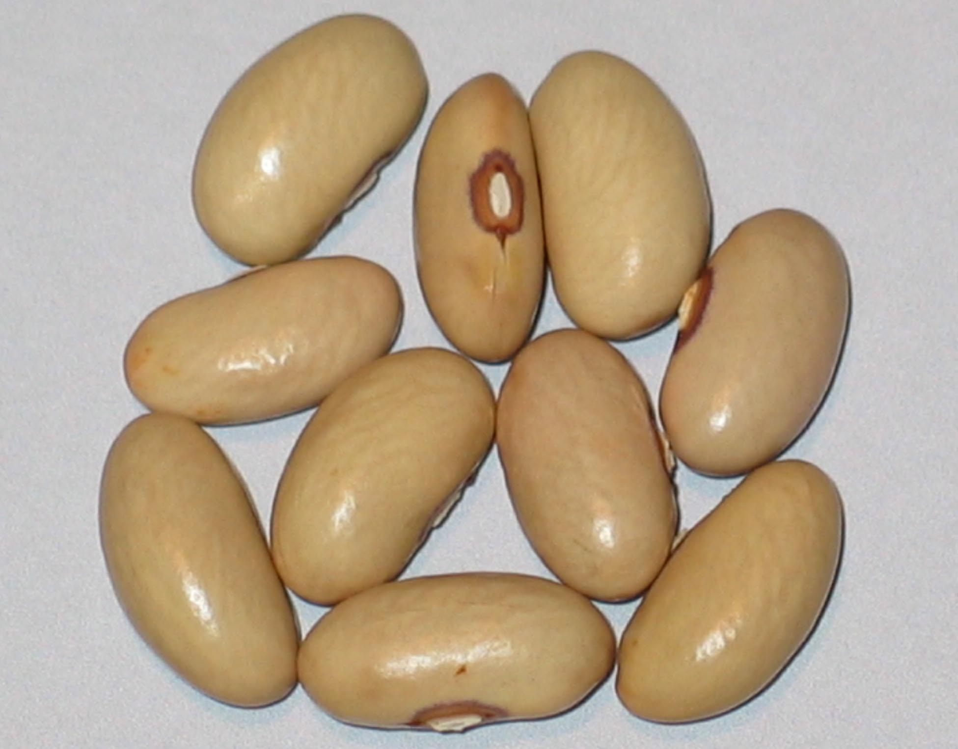 image of Bountiful beans