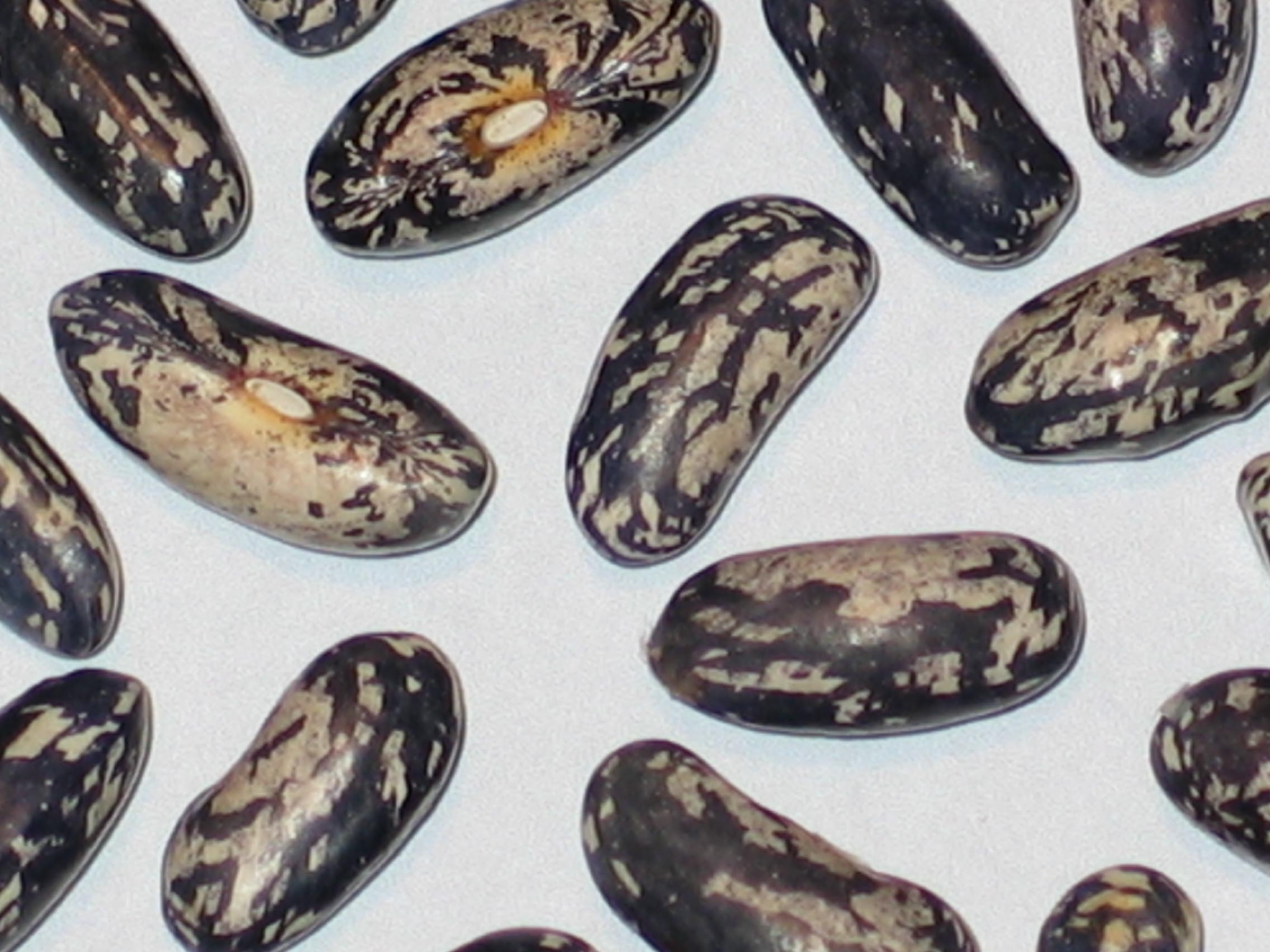 image of Bountiful Ester beans