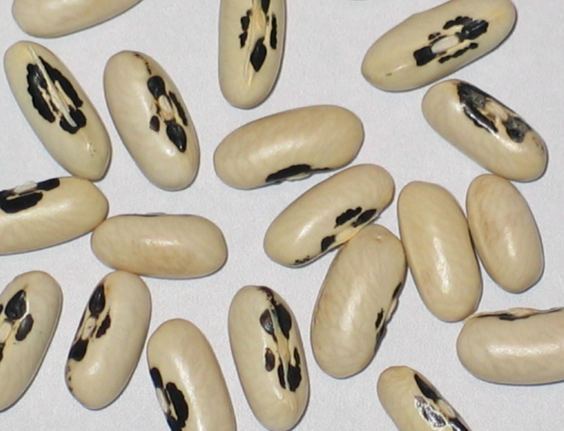image of Brittle Wax beans