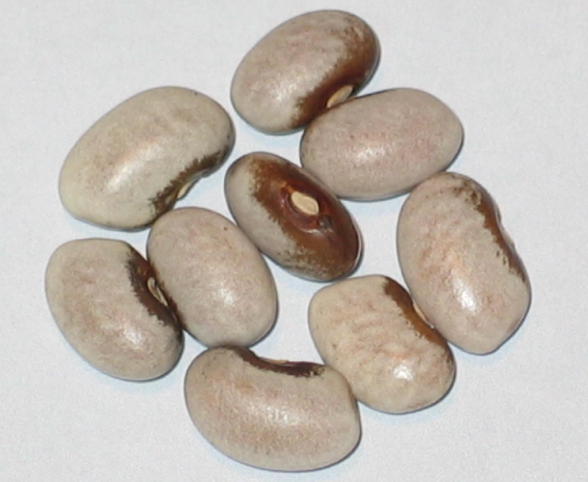 image of Brown-Eyed Goose beans