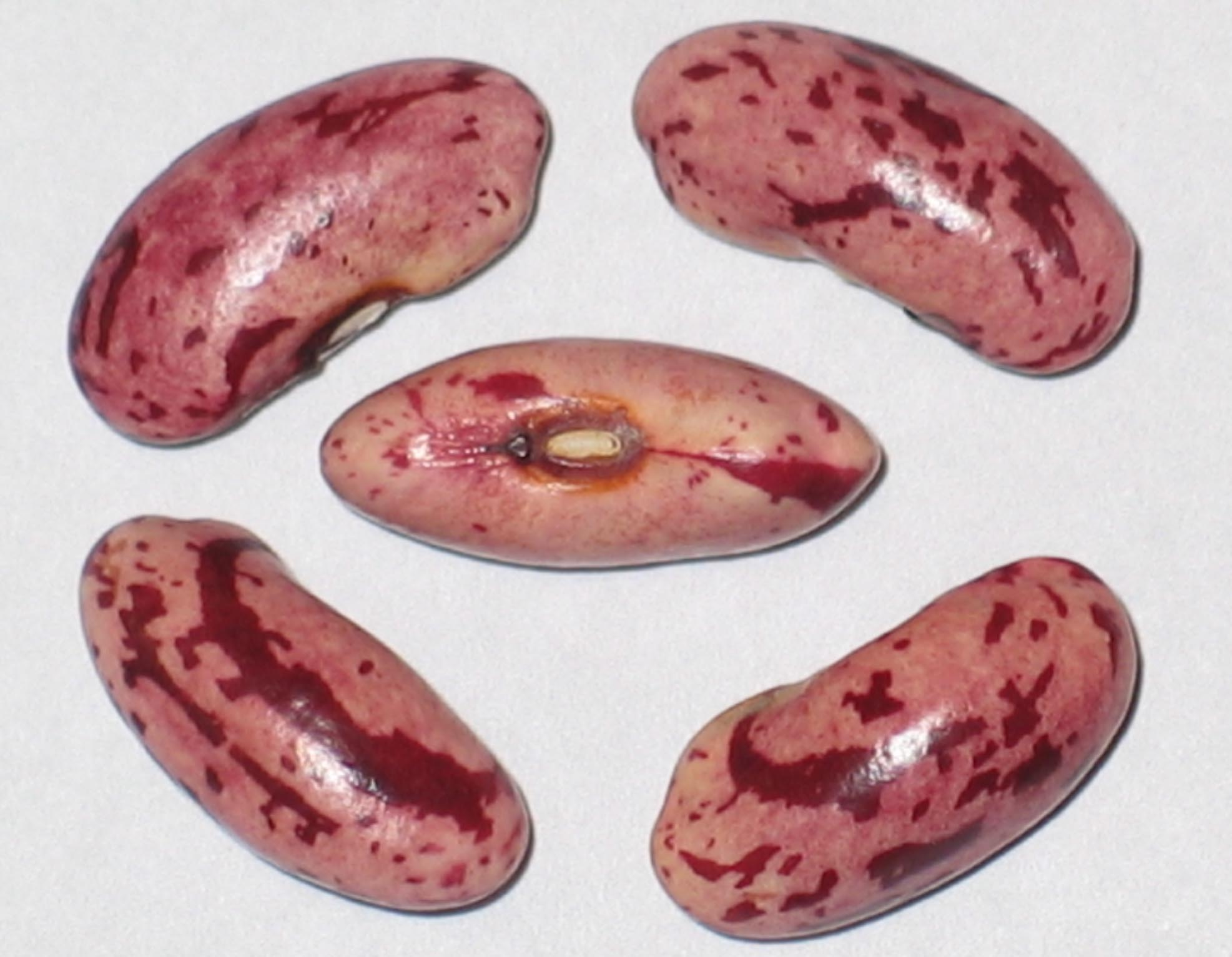 image of Candy beans
