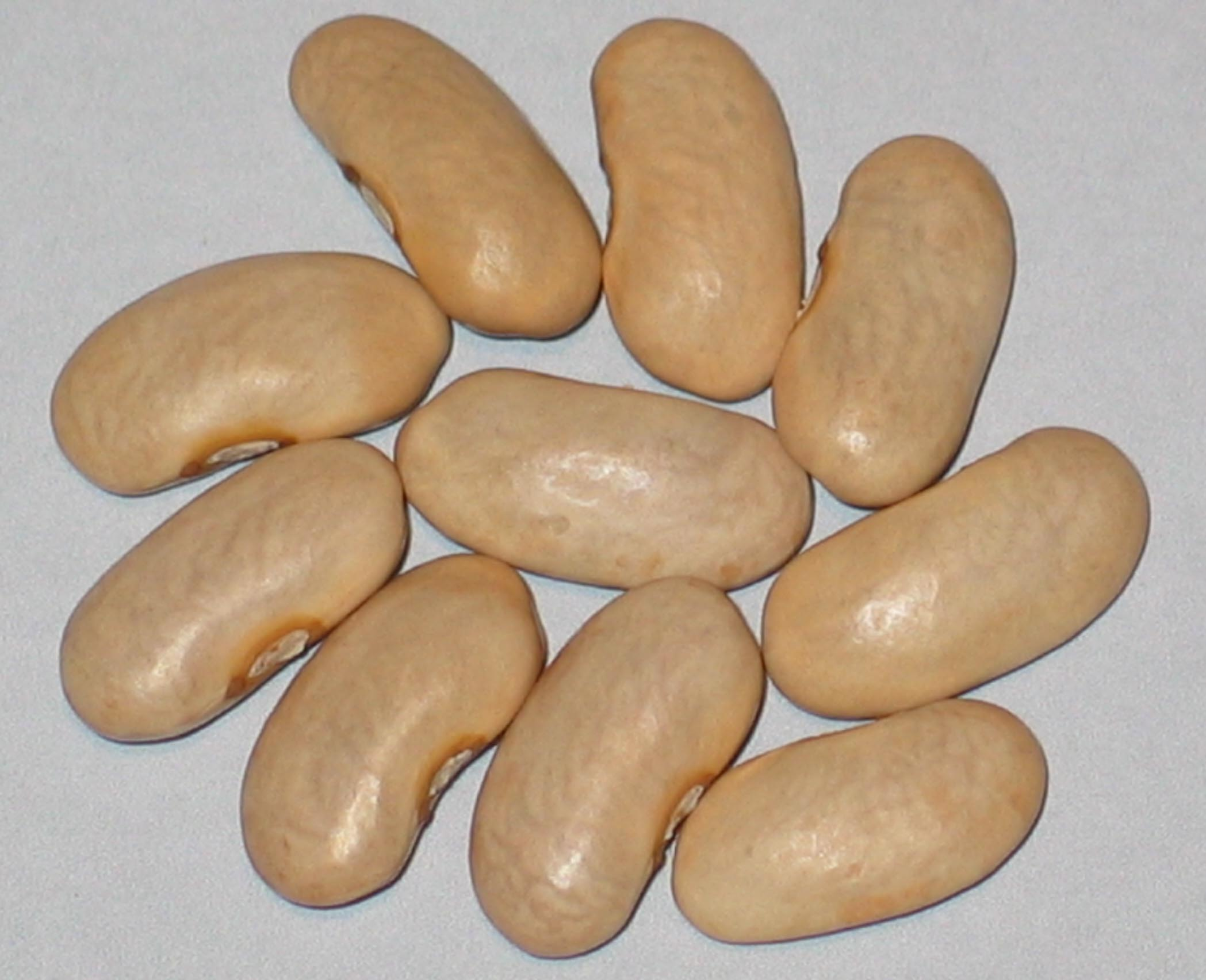 image of Cassies Purple Pod beans