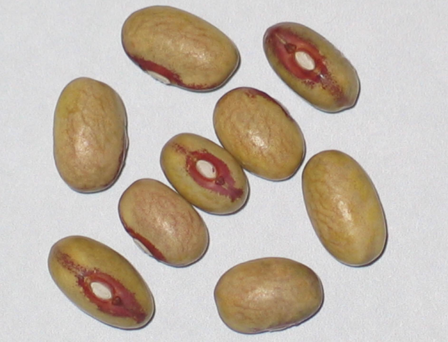 image of Chickasaw beans