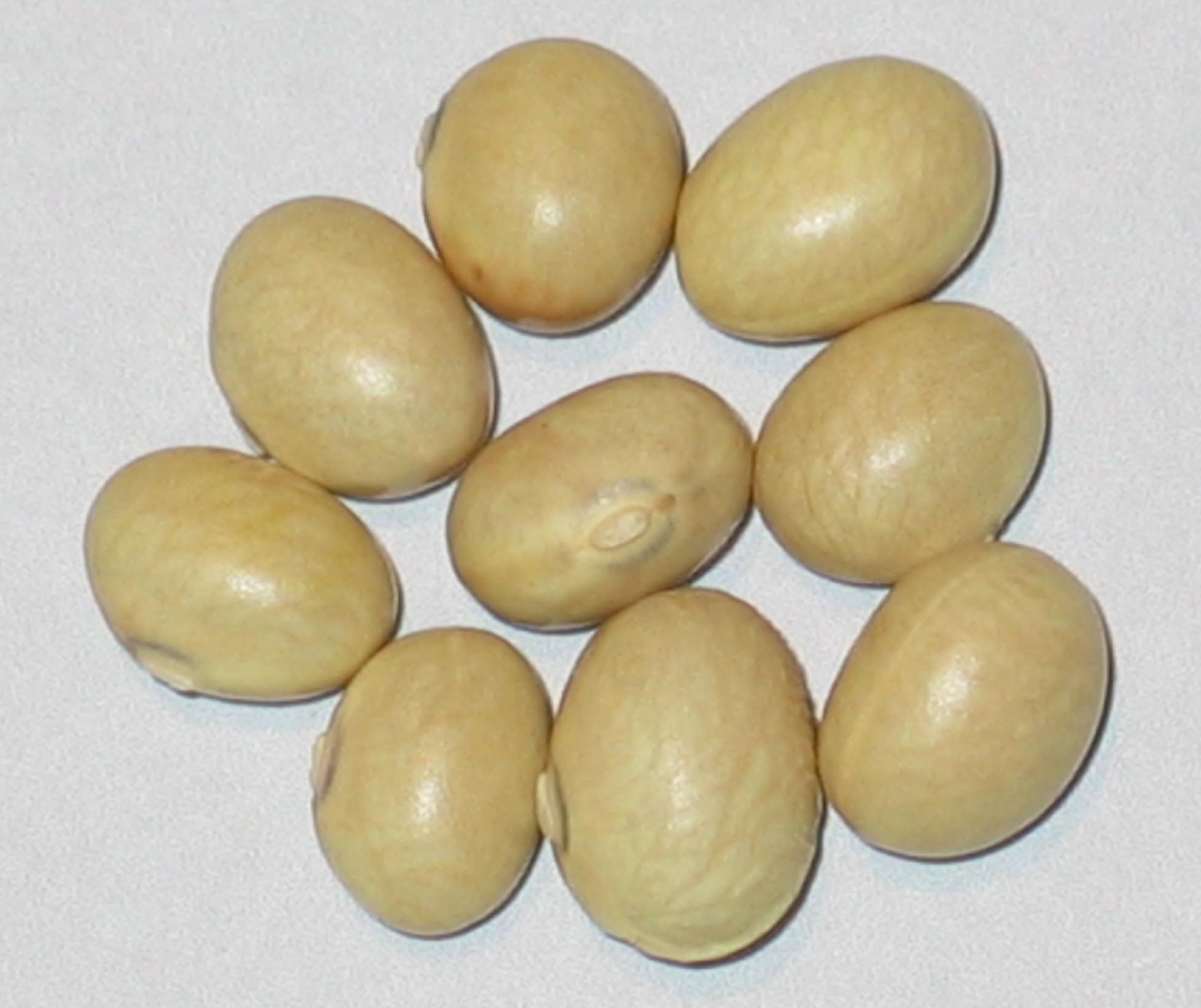 image of China Yellow beans