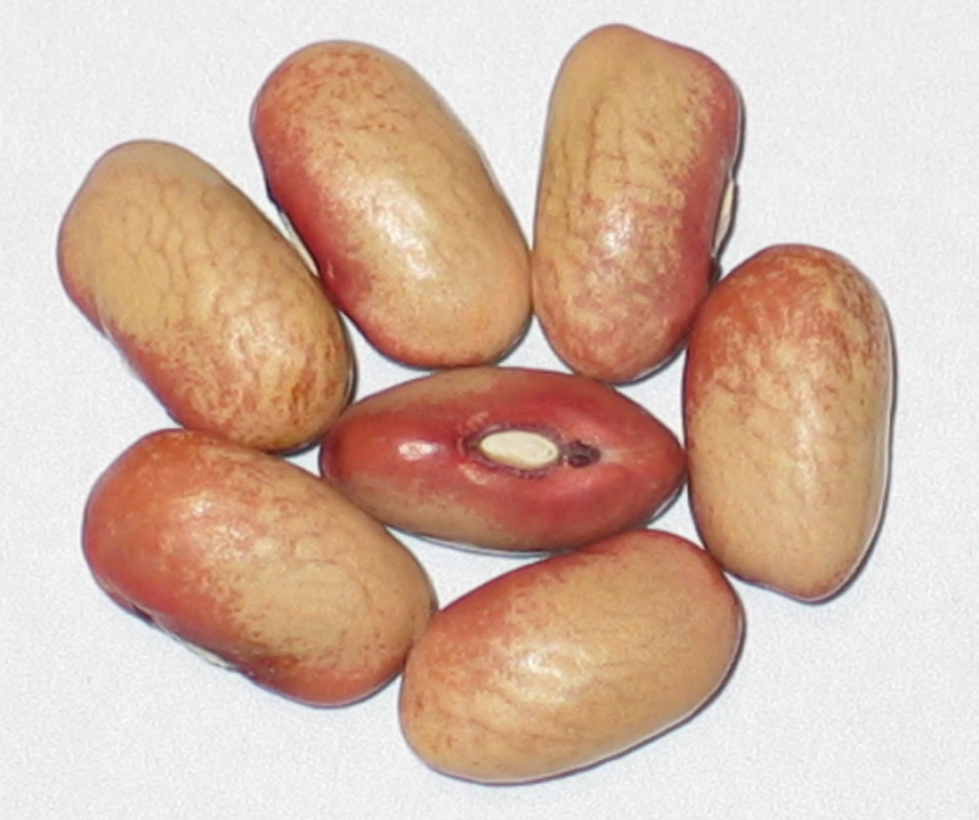 image of Choctaw beans