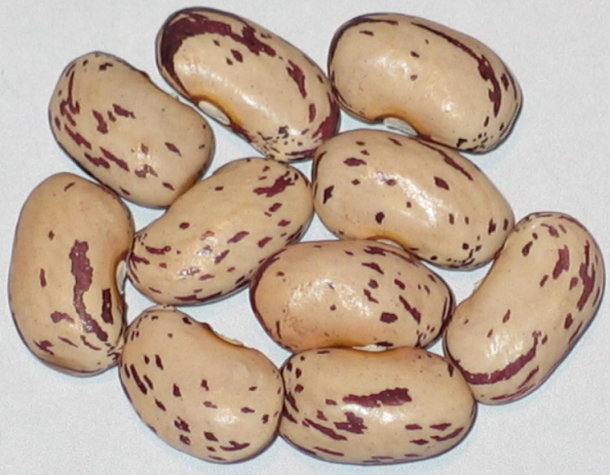 image of Coco Rubico beans