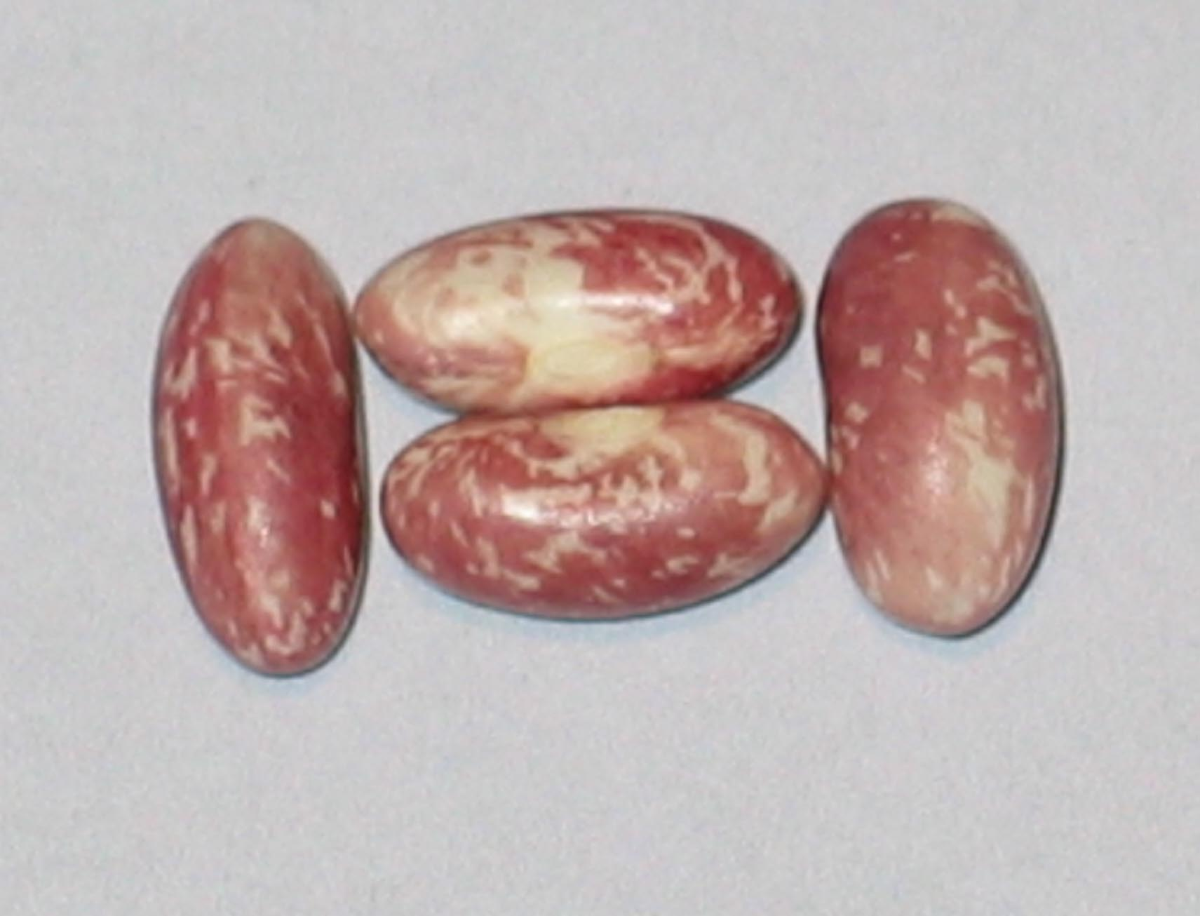 image of Conserva beans