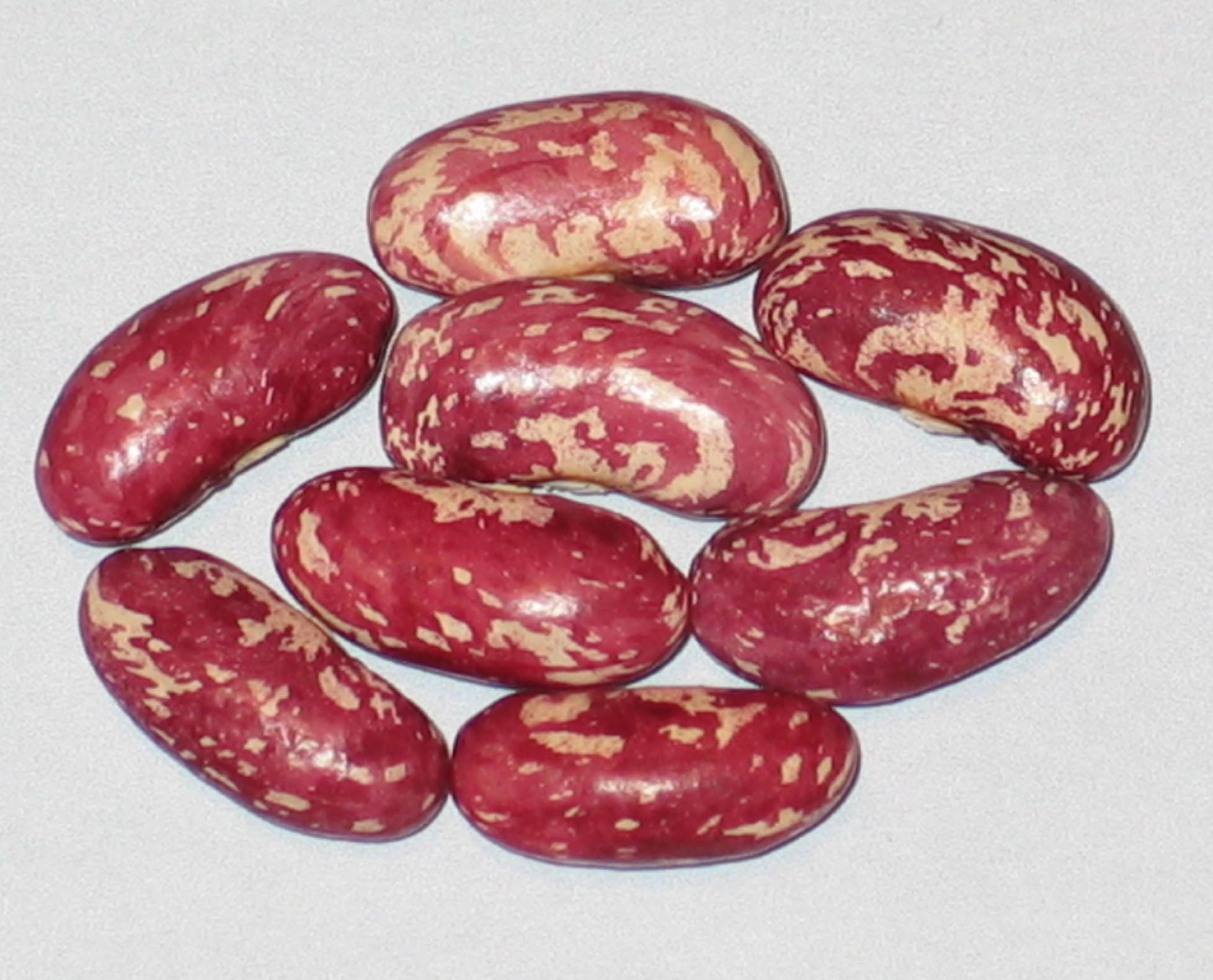 image of Cranberry Goose beans