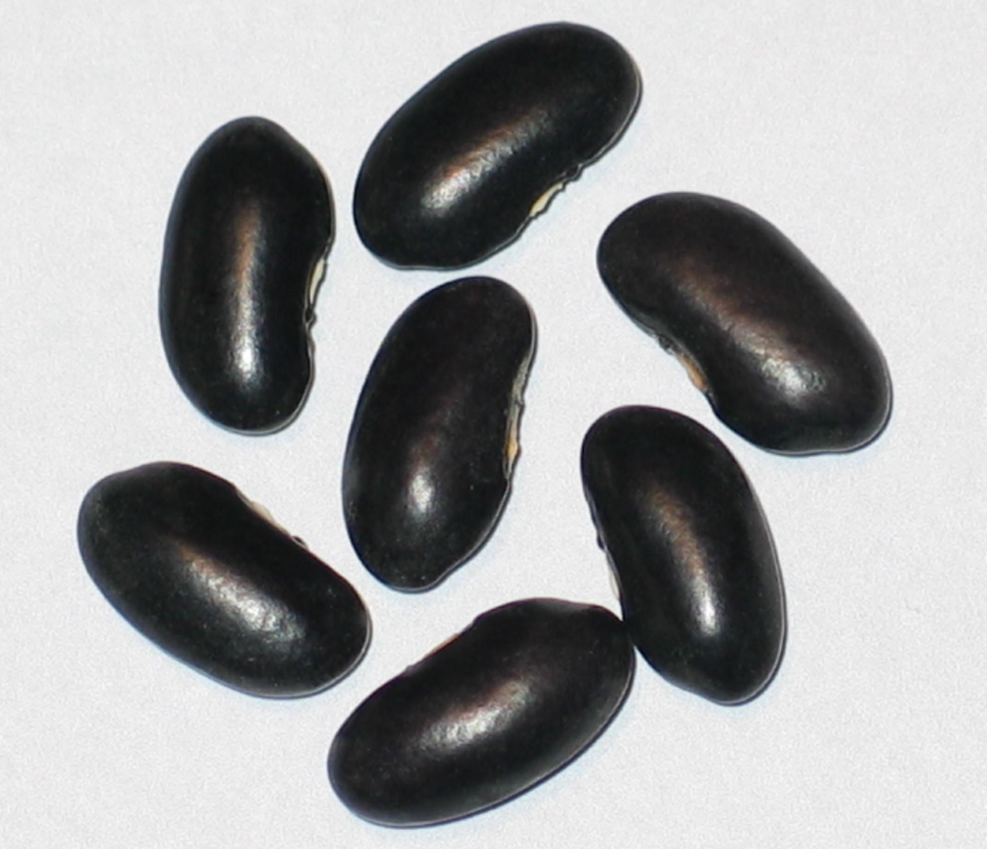 image of Crow River Black beans