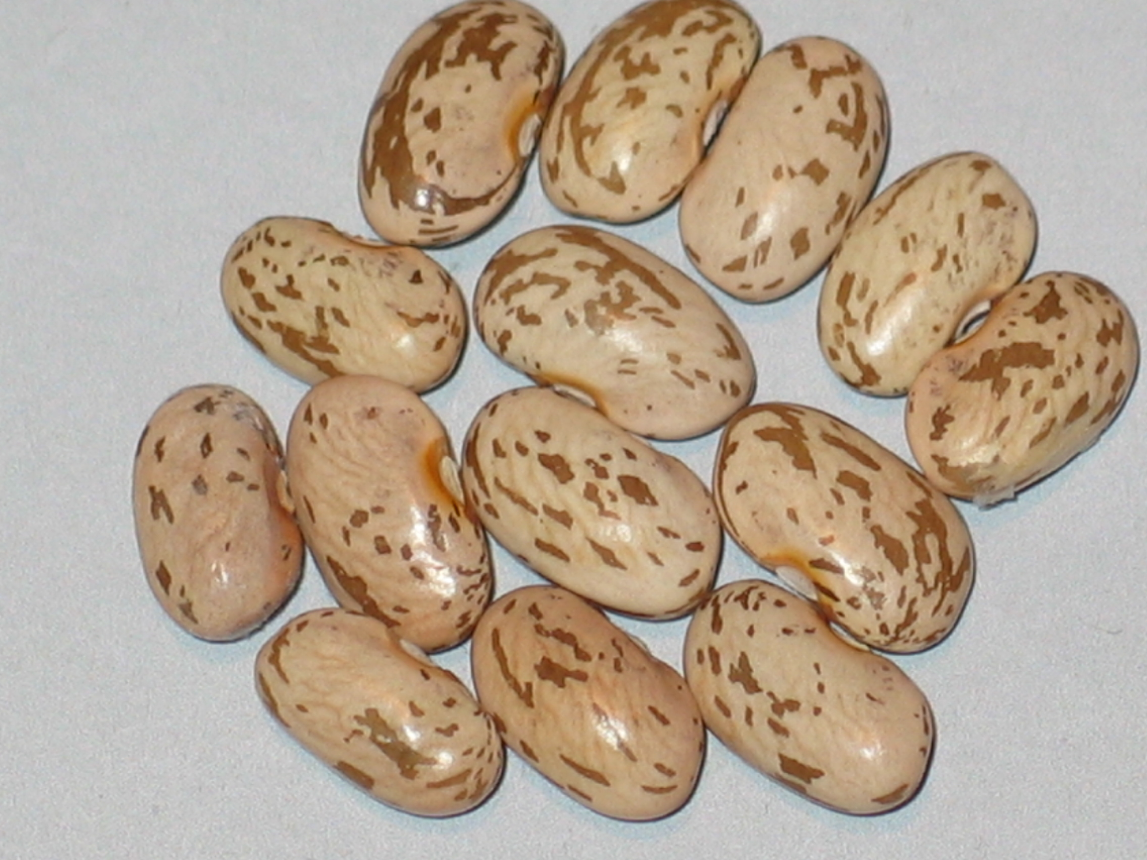 image of Early Victor beans