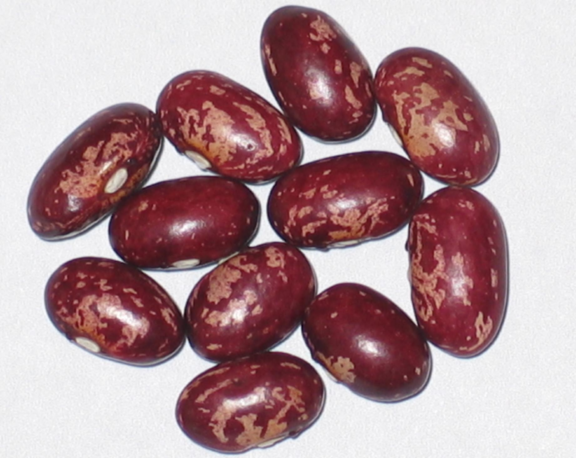 image of Early Warwick beans