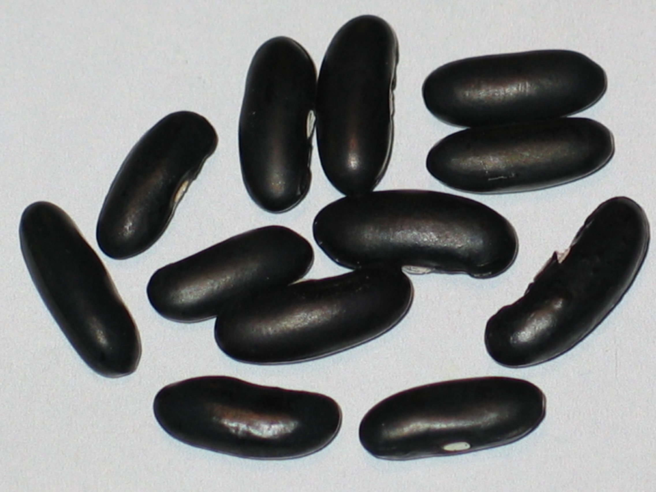 image of Fasold beans