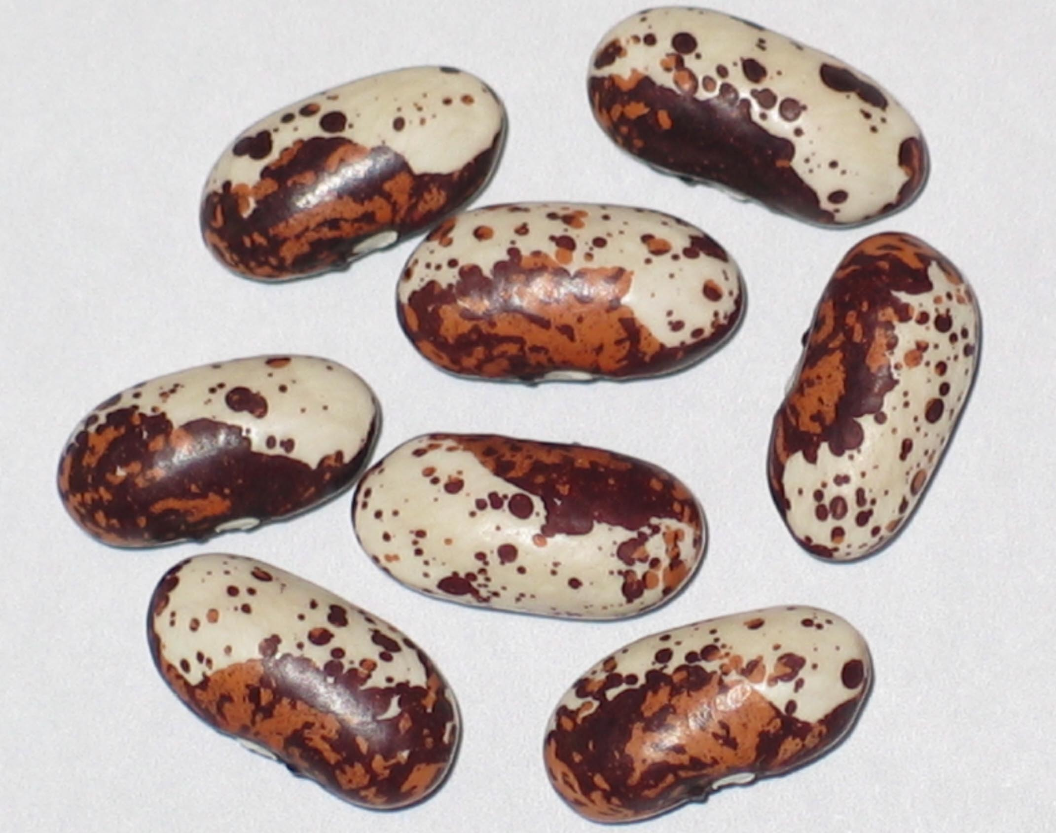 image of Frauenbohne beans