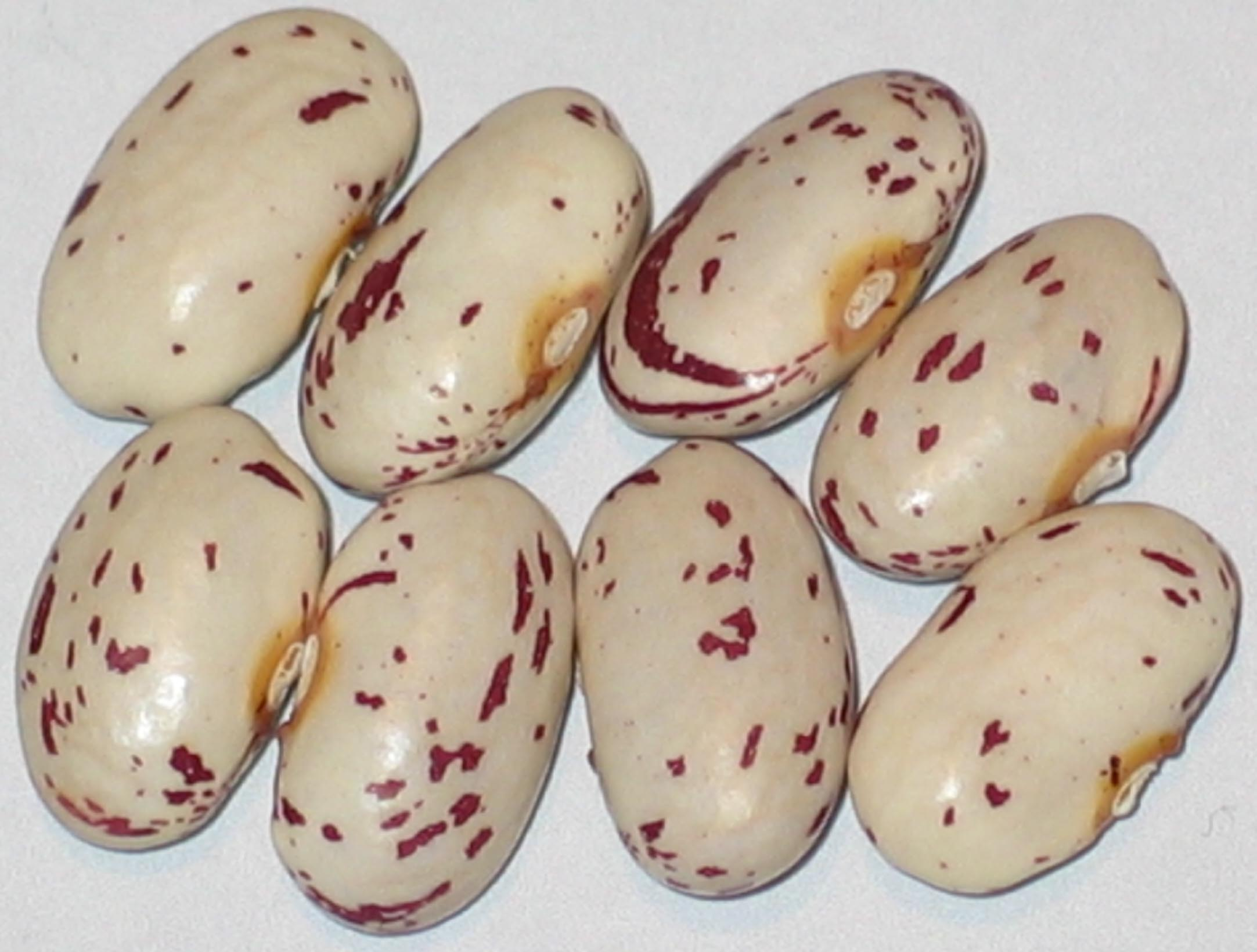 image of Gillenwater beans