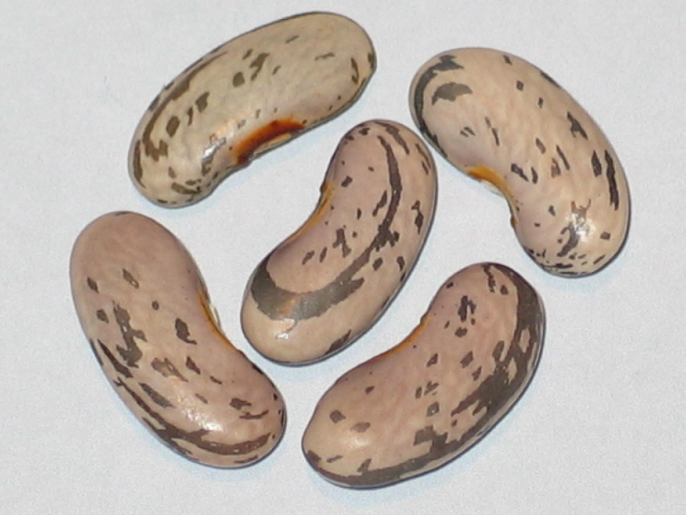 image of Gill's Deliciois Giant beans