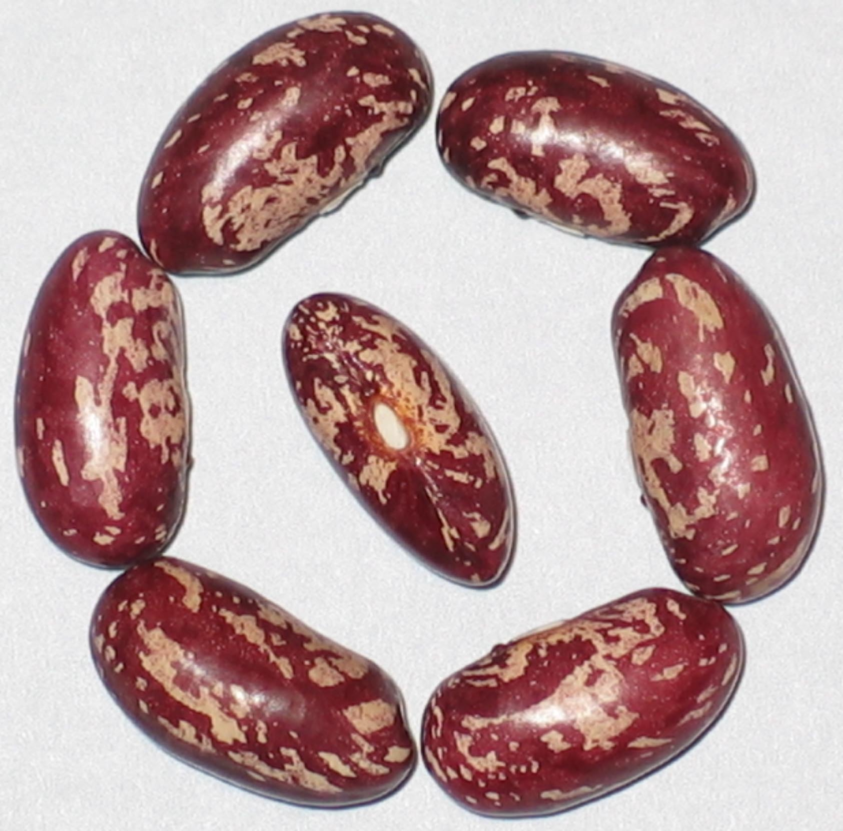 image of Gross Brothers Vermont Cranberry beans