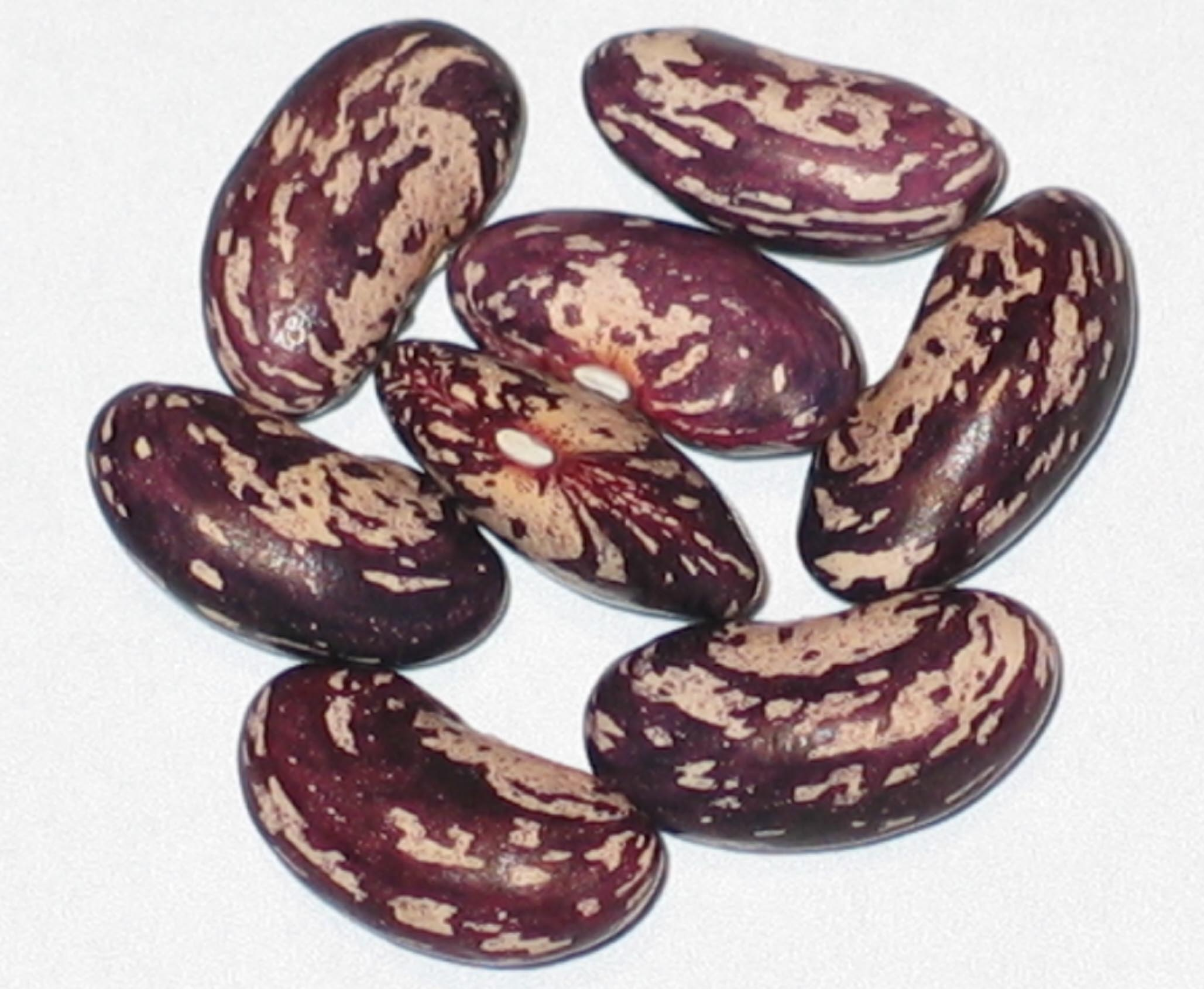 image of Horsehead beans