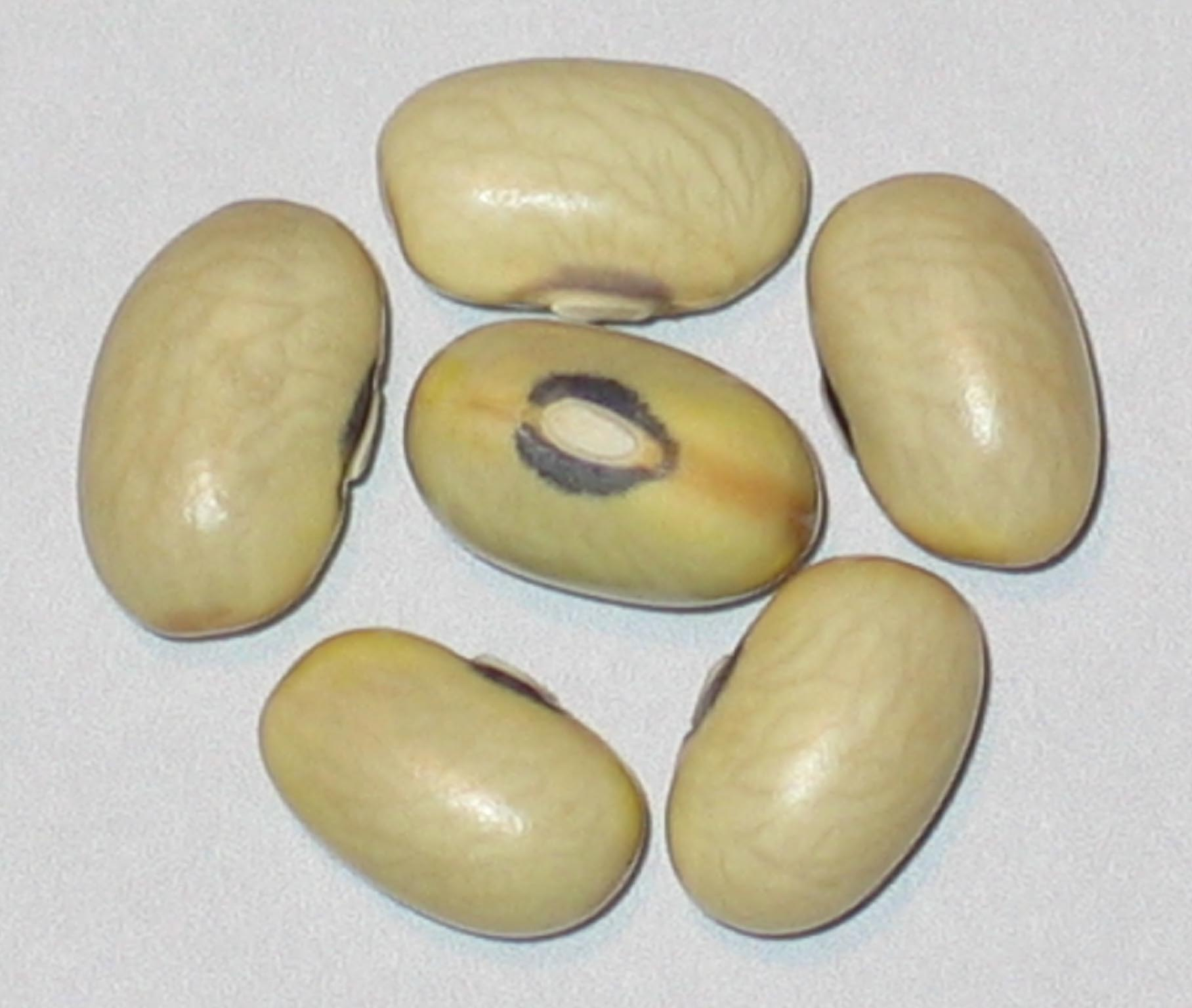 image of Hutterite beans
