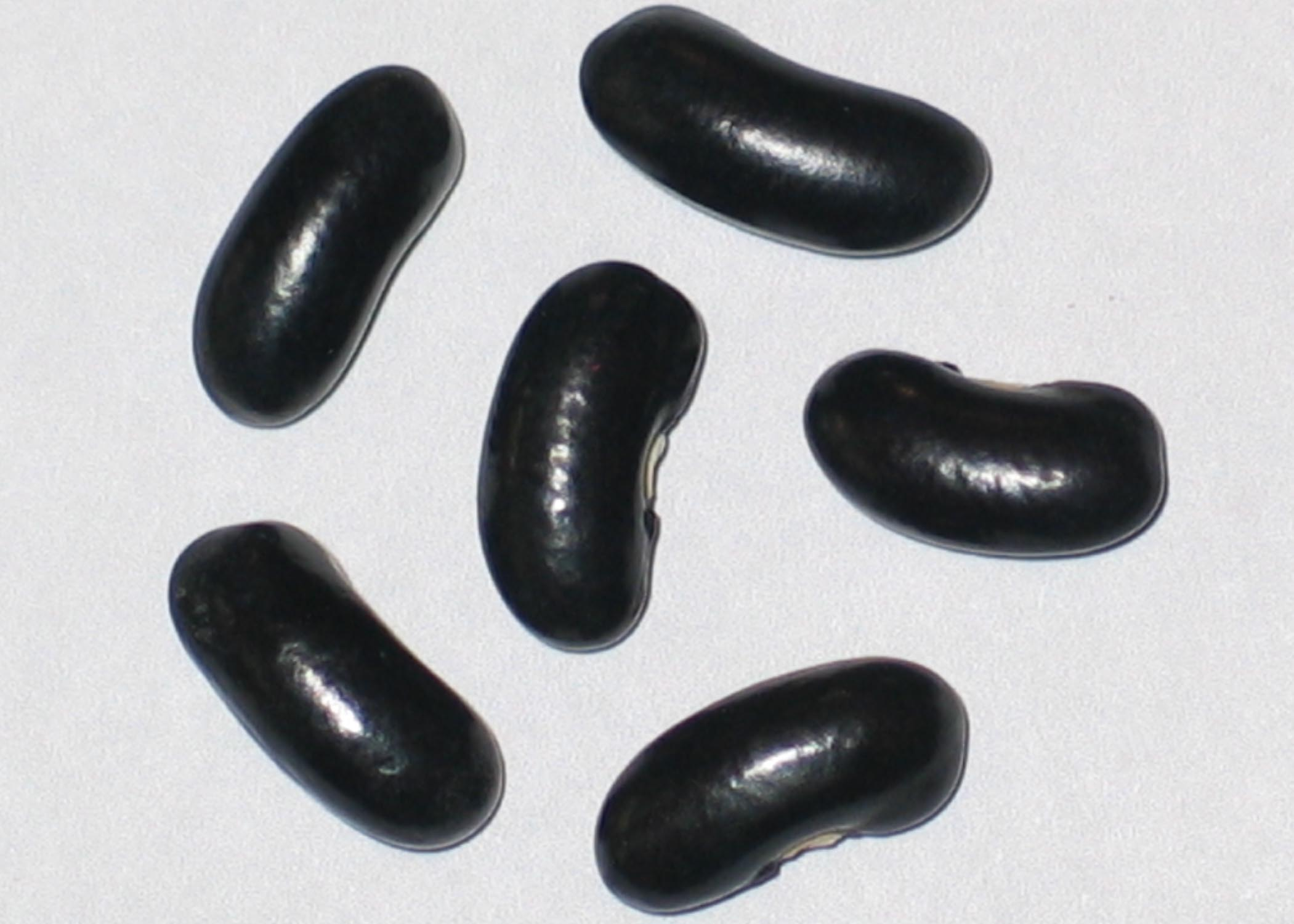image of Illinois Snap beans