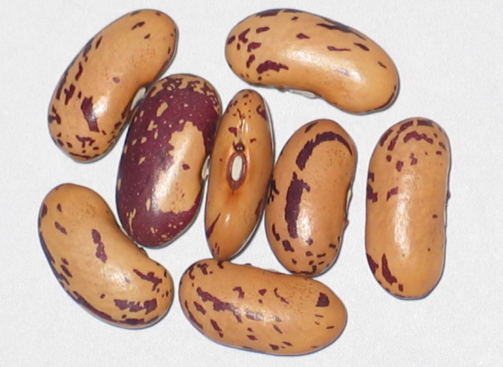 image of John's Bean beans