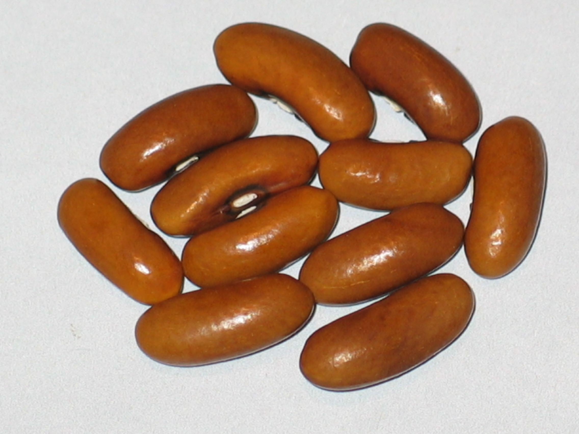 image of Kay Snap beans