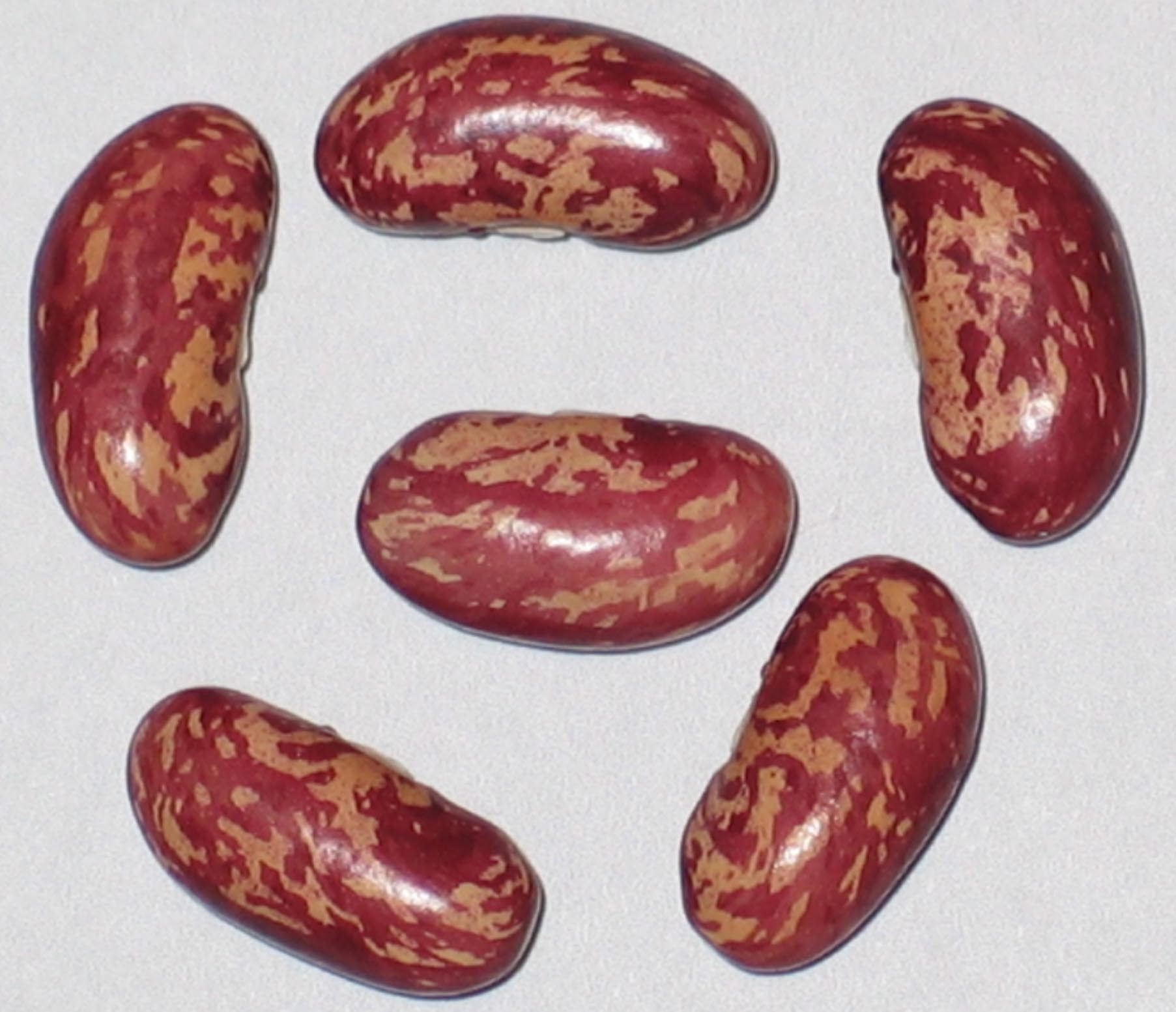 image of King Of The Earlies beans
