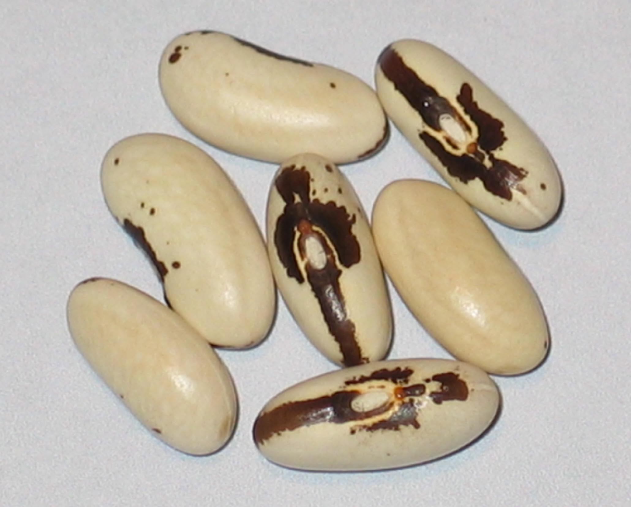 image of Lavender beans