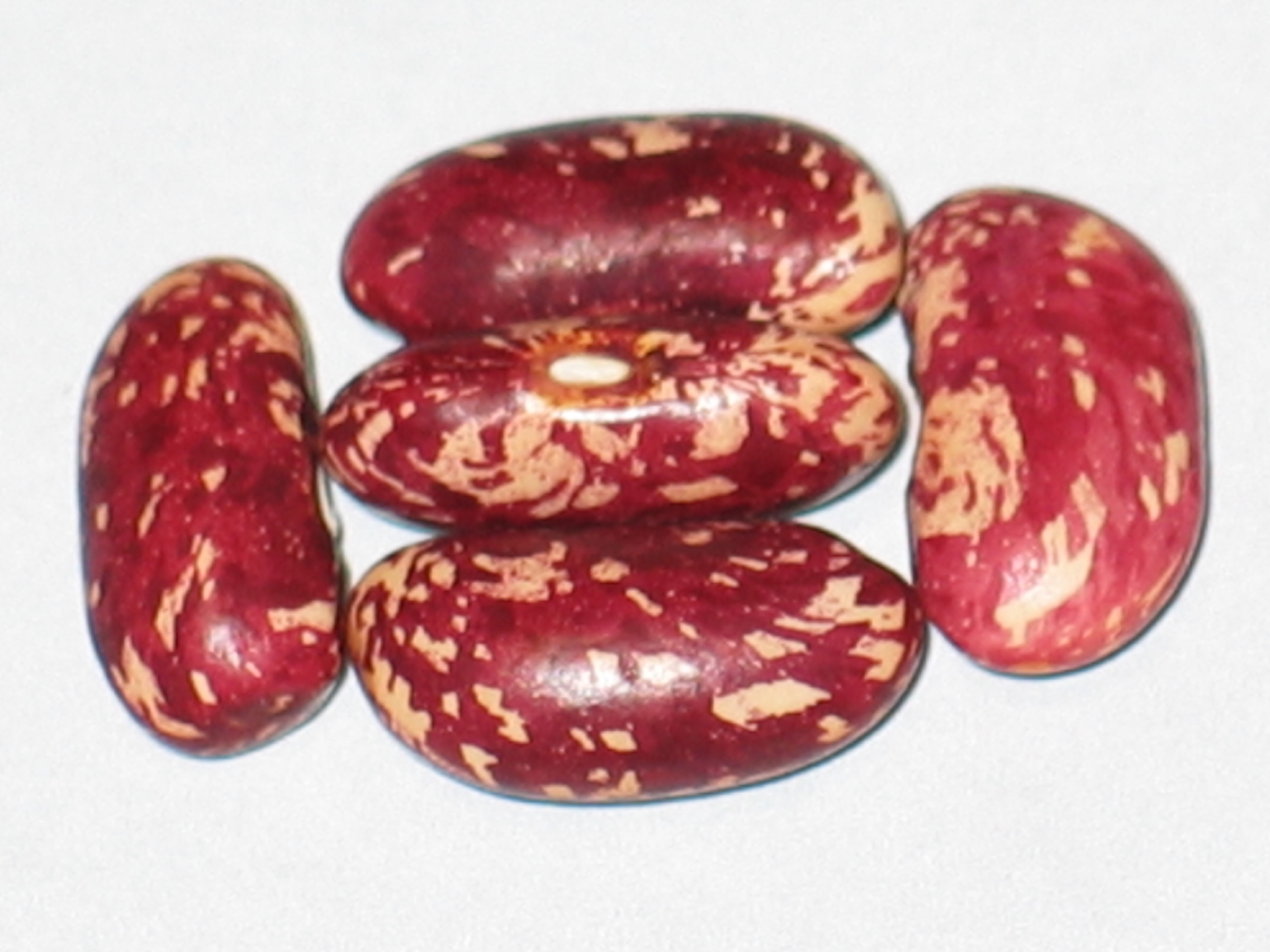 image of Longfellow beans