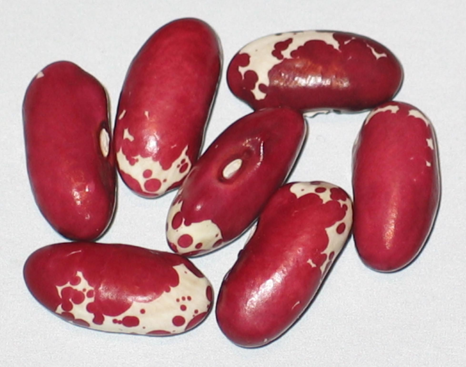 image of Mammoth Trout beans
