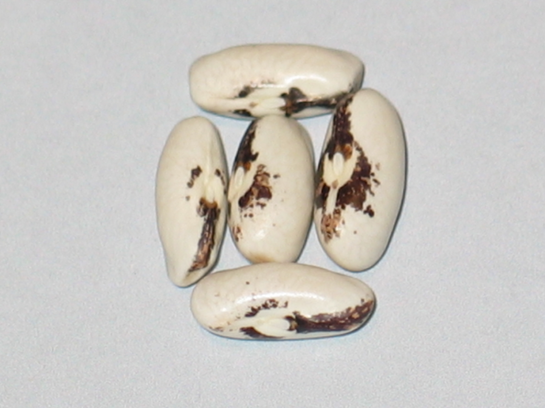 image of Medal Refugee beans