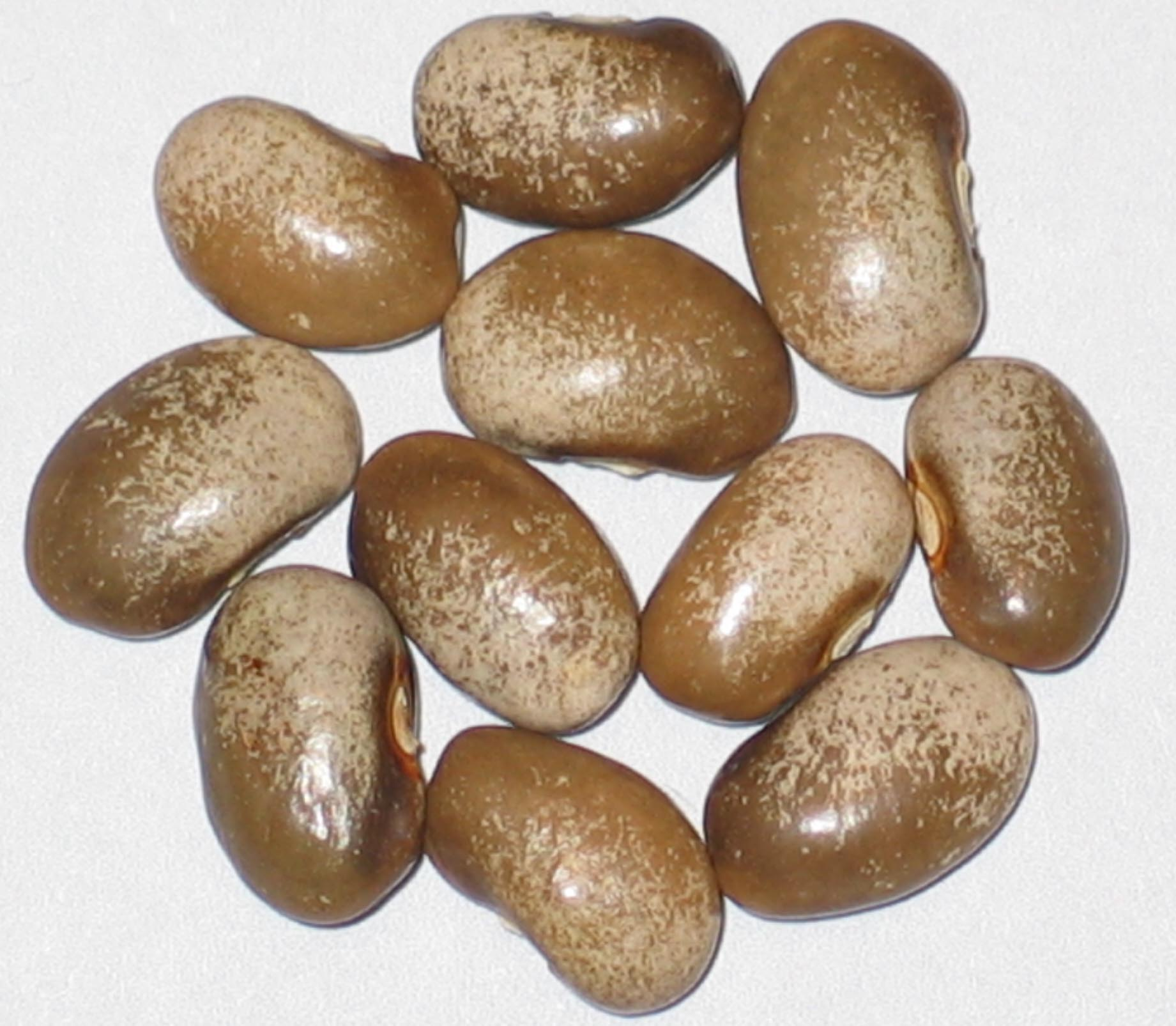 image of Milk And Cider beans