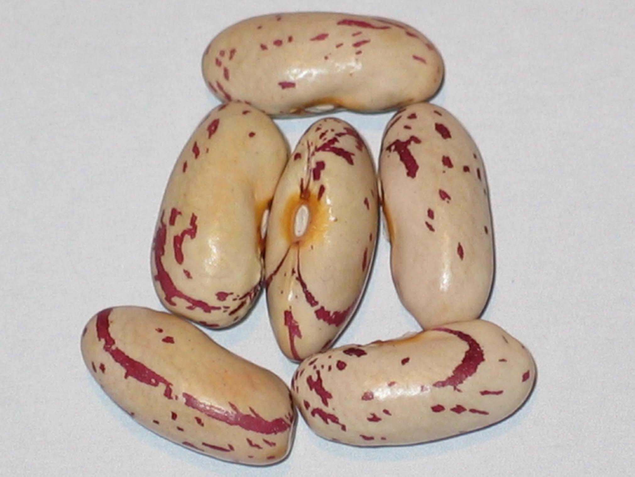 image of Missouri Bill's beans