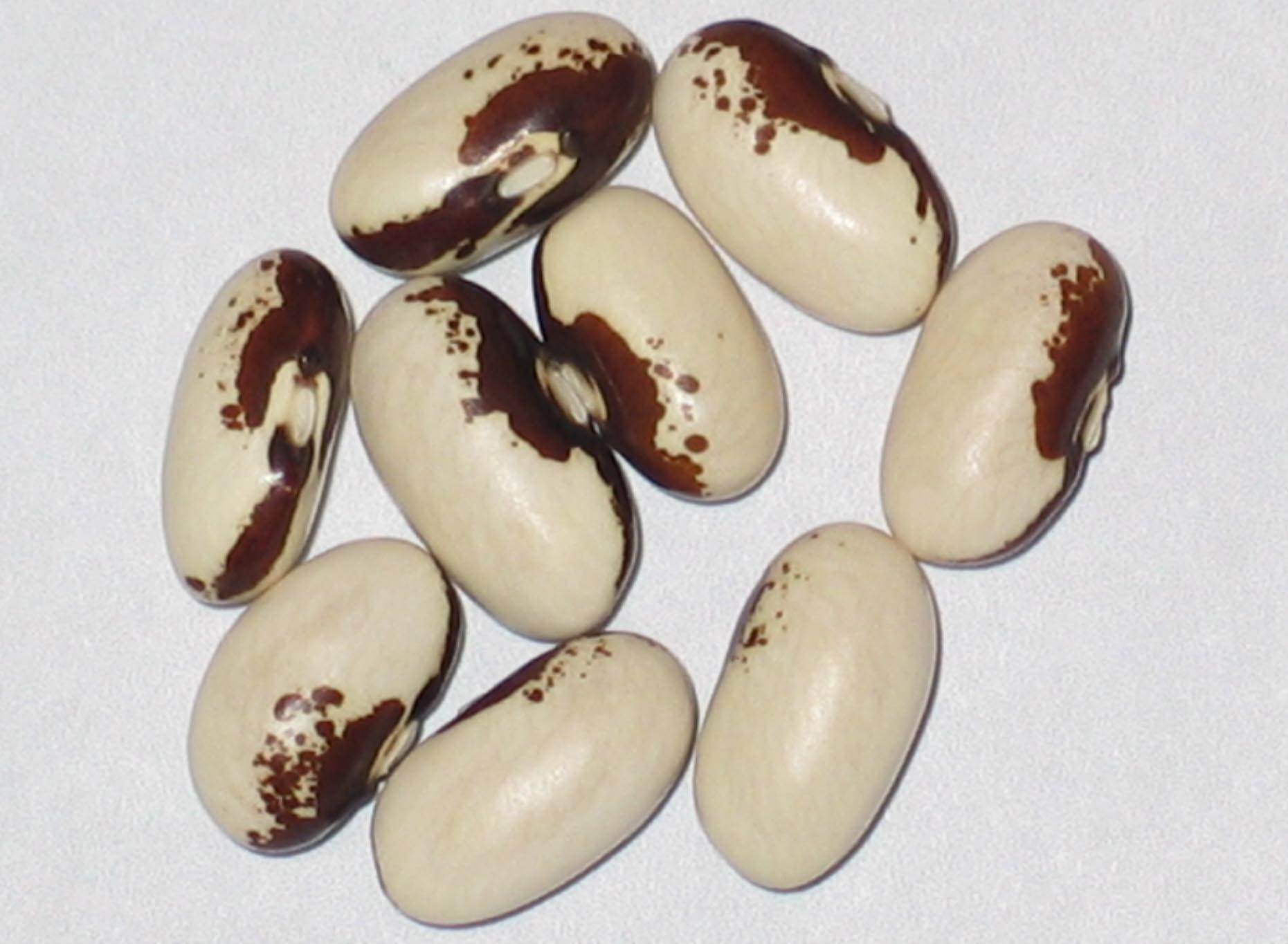 image of Moon beans