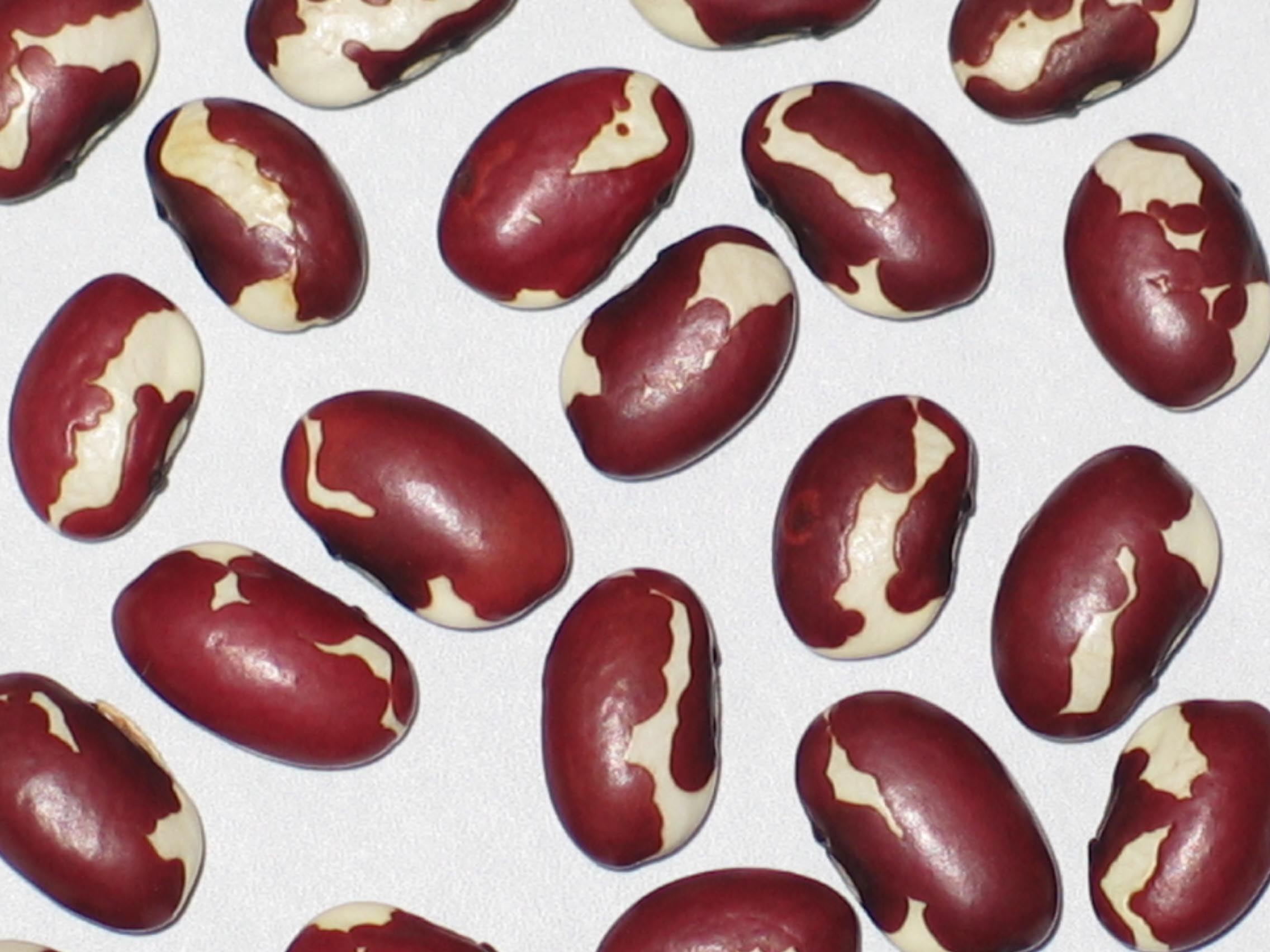 image of New Mexico Red Appaloosa beans