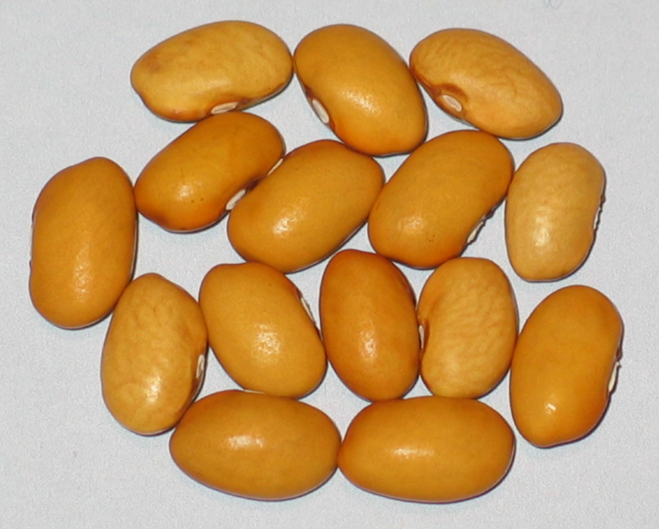 image of Nez Perce beans