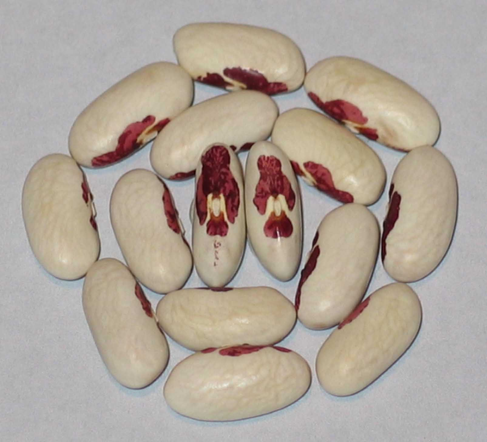image of Nun's Belly Button beans