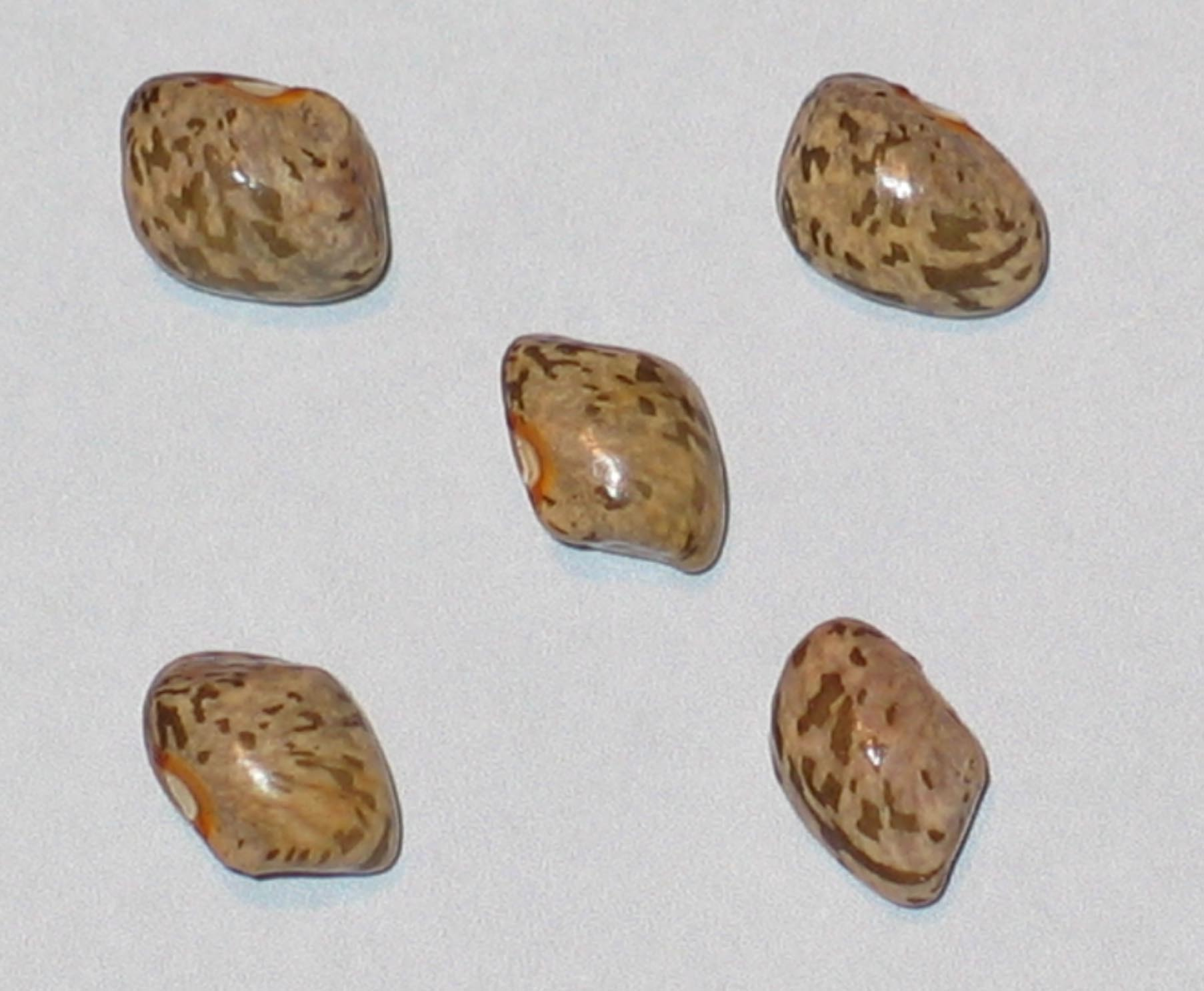 image of Ora's Speckled beans