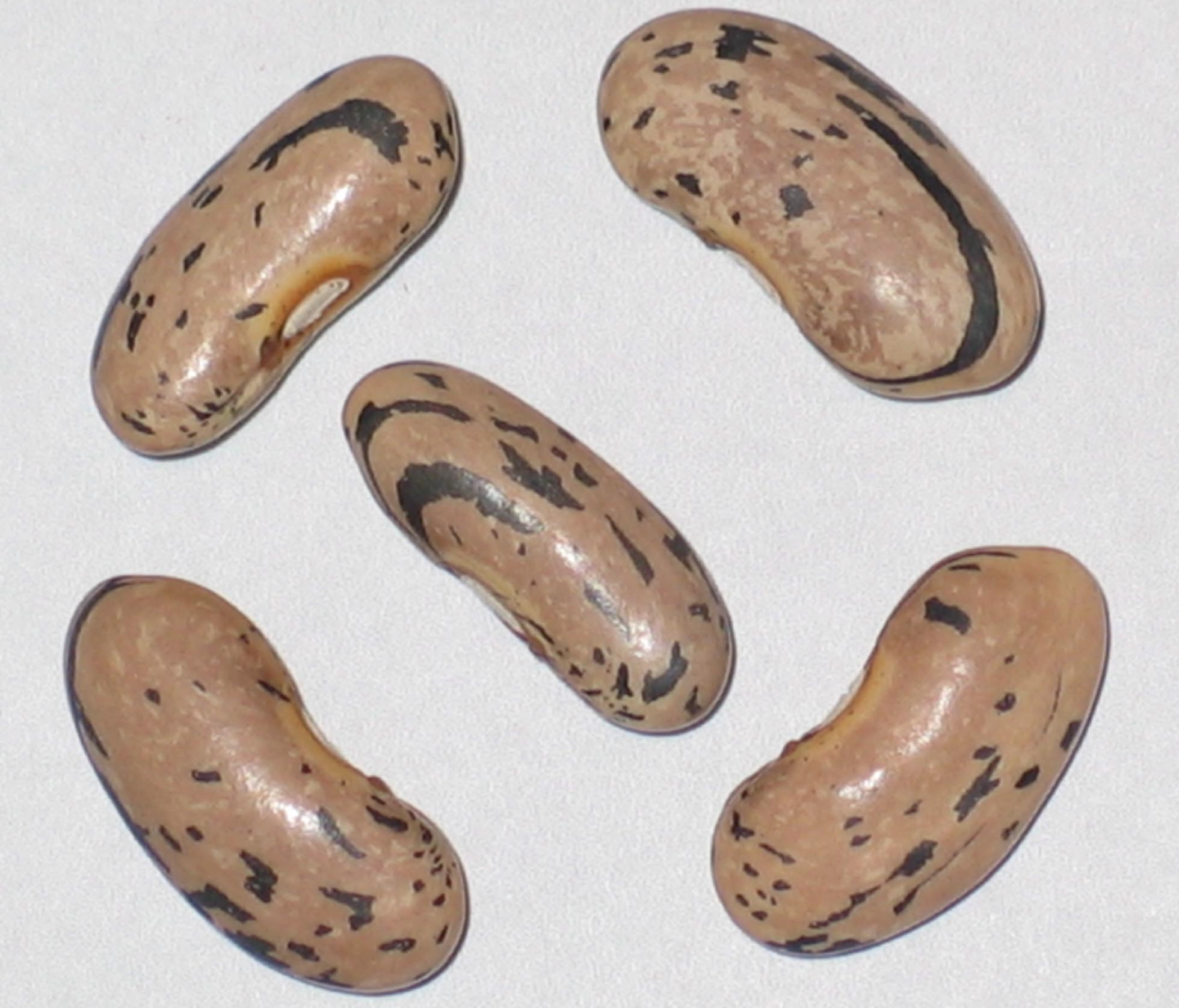 image of Oregon Giant beans