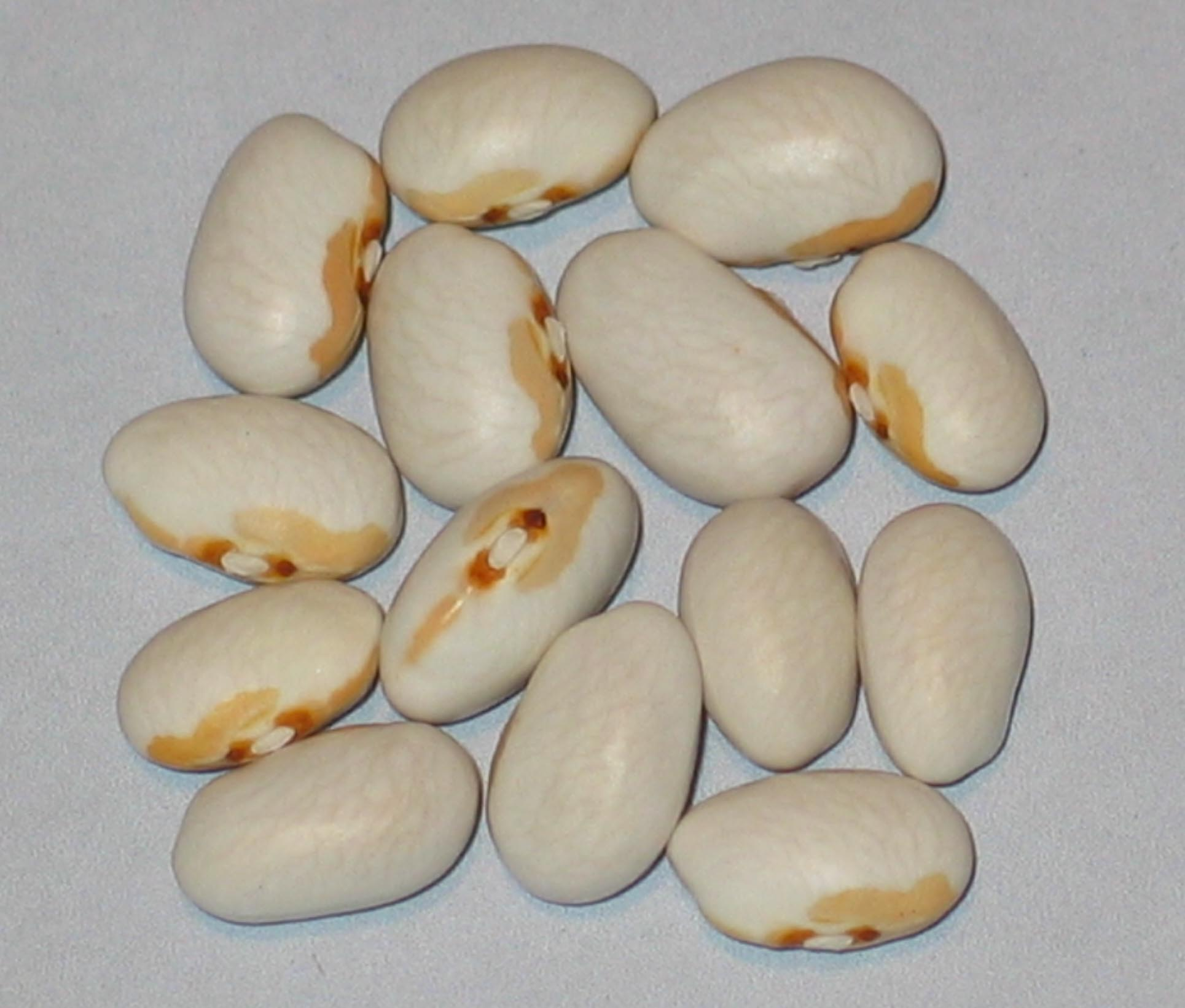 image of Pale Face beans