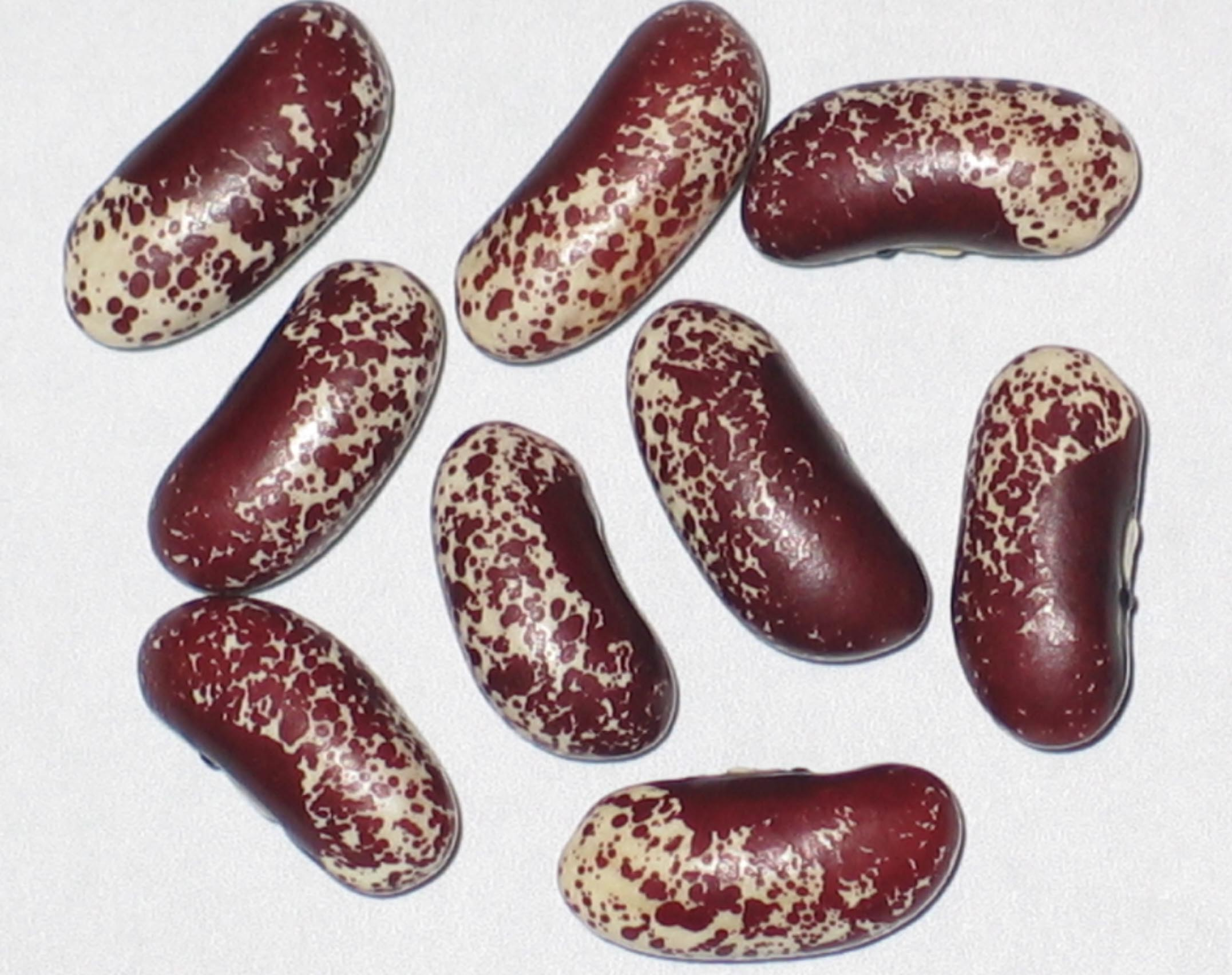 image of Smith River Super Speckle beans